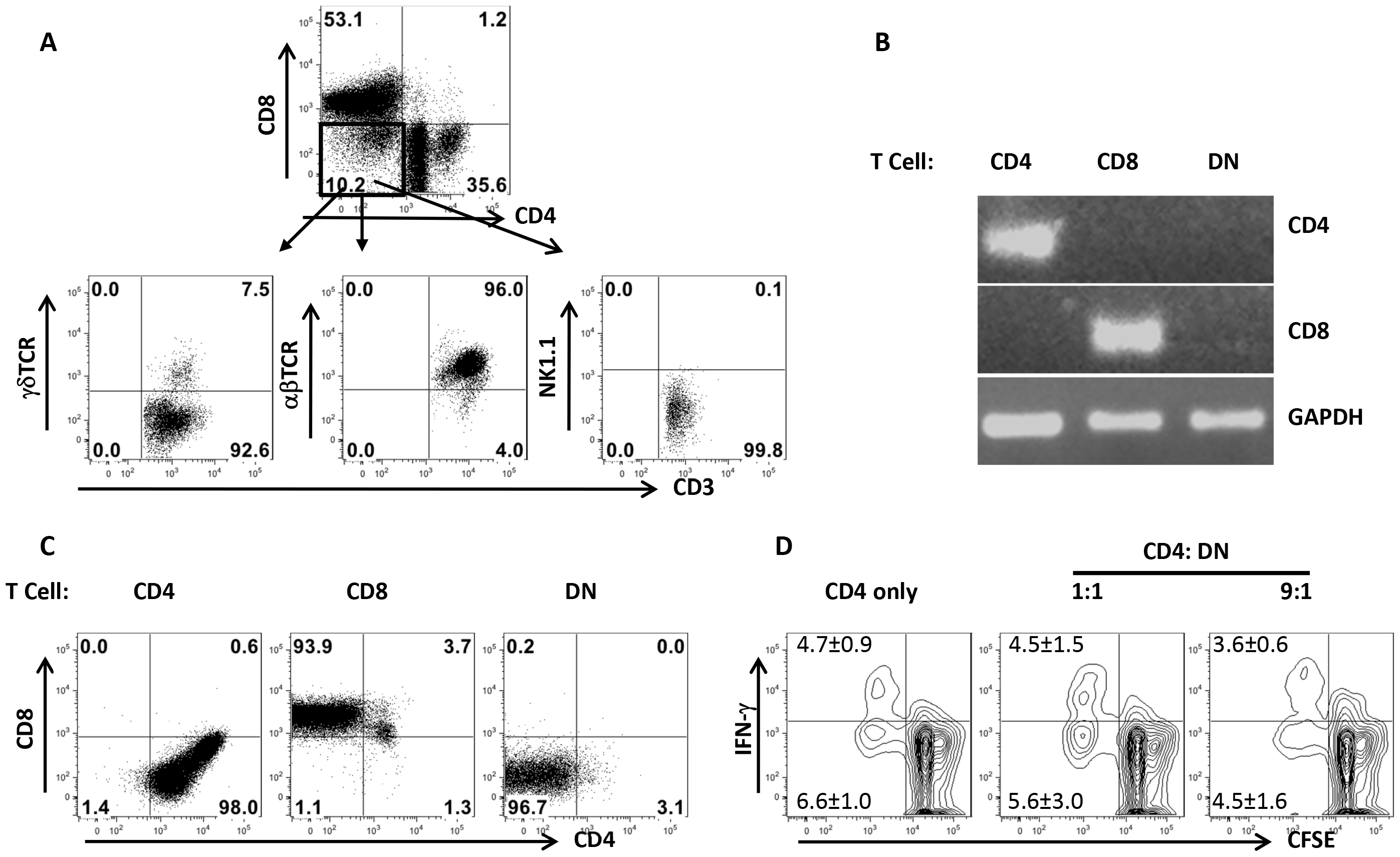 DN T cells predominately express αβ-TCR and do not have regulatory properties.