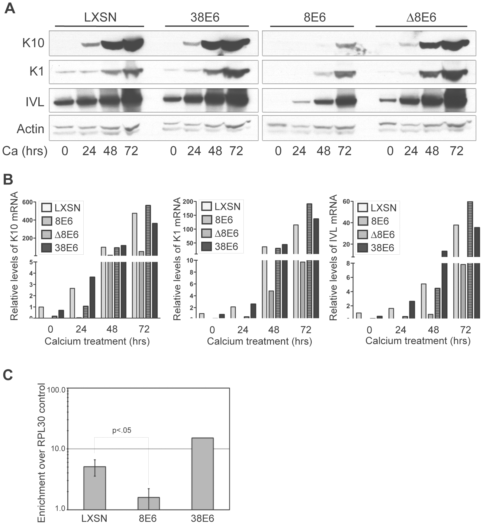 p300 degradation alters K1, K10 and IVL expression.