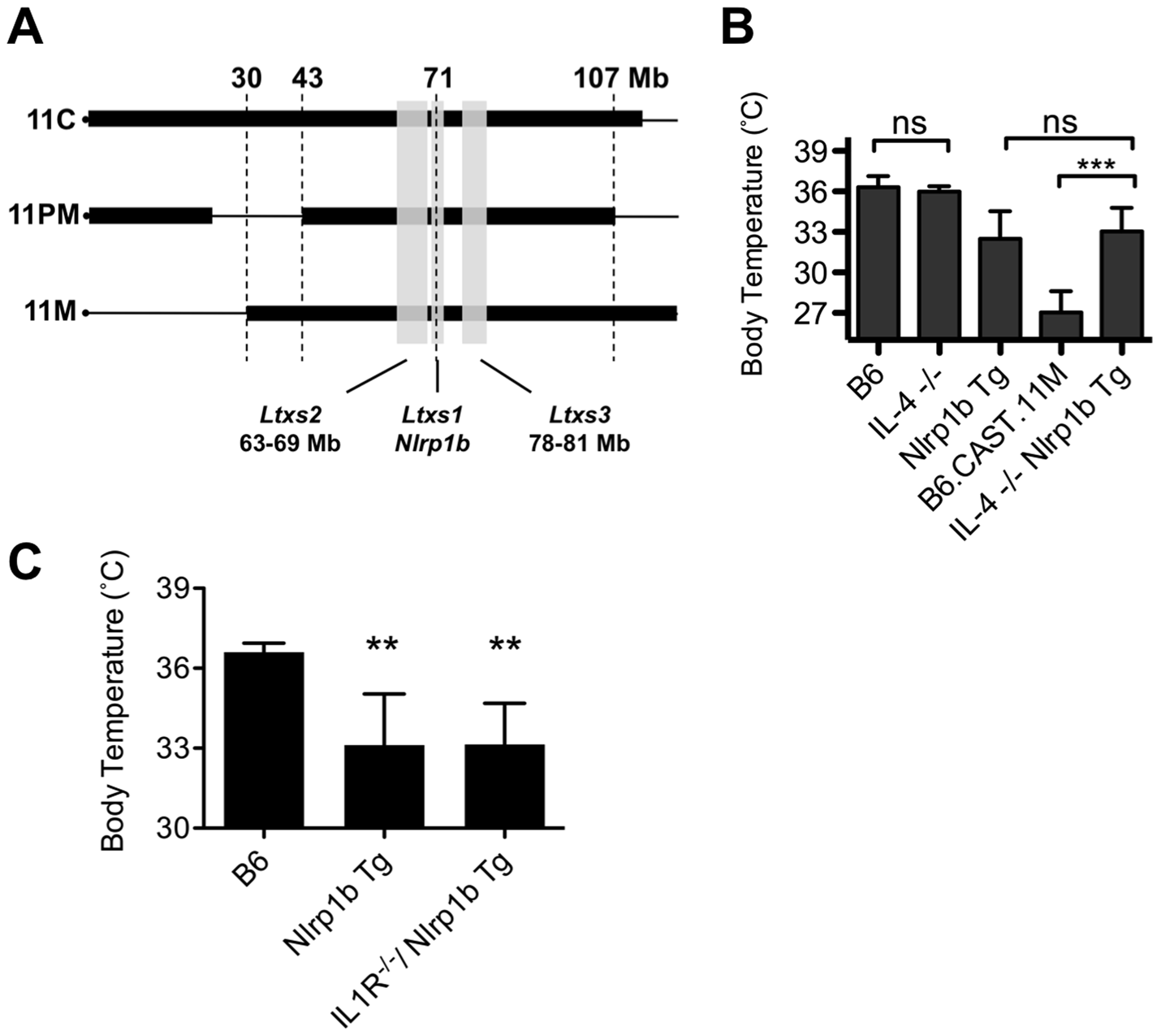 The role of IL-4 in the Nlrp1b-mediated response to LT.