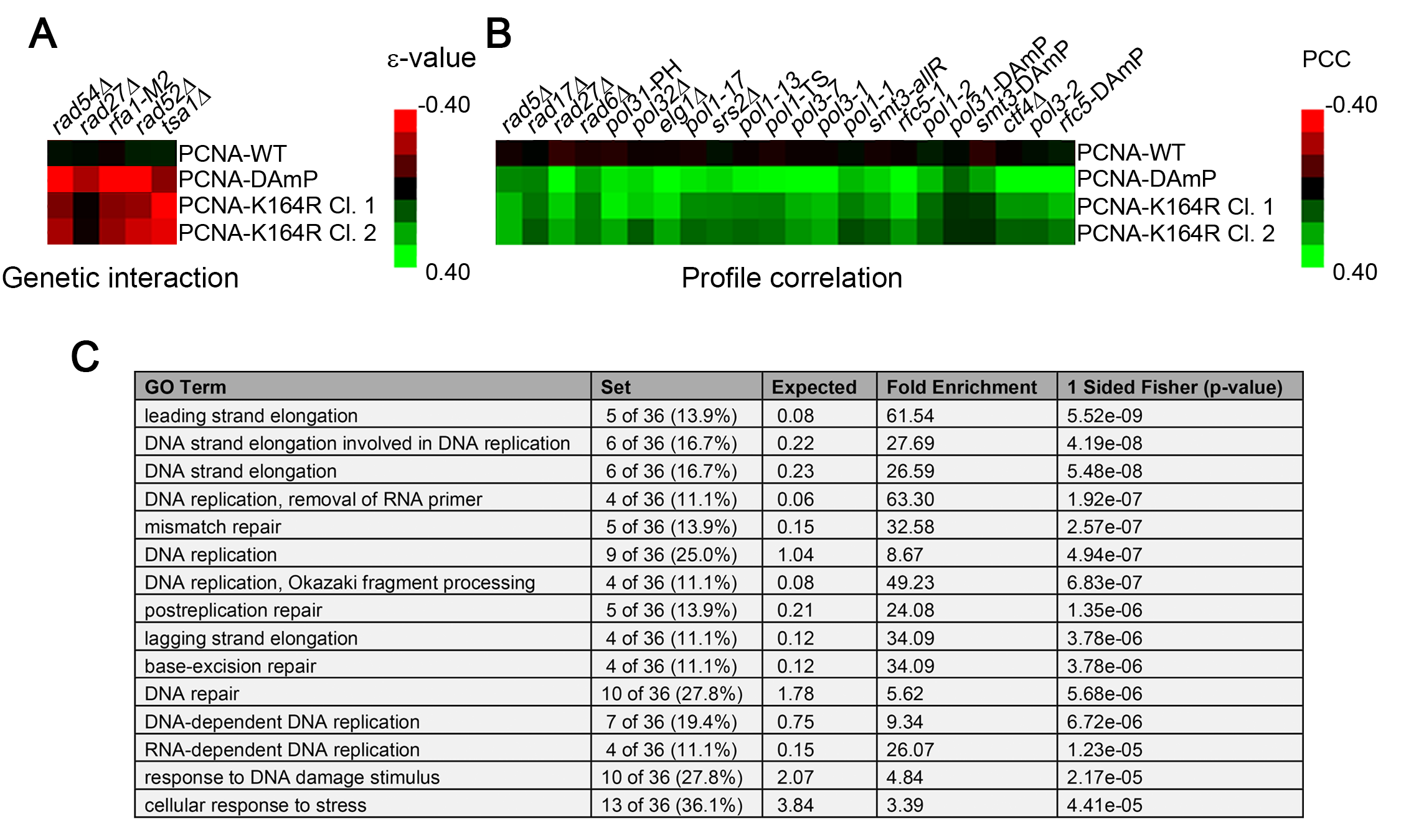 The PCNA-K164R SGA profile exhibits a limited set of direct genetic interactions but correlates strongly with other replication mutants.