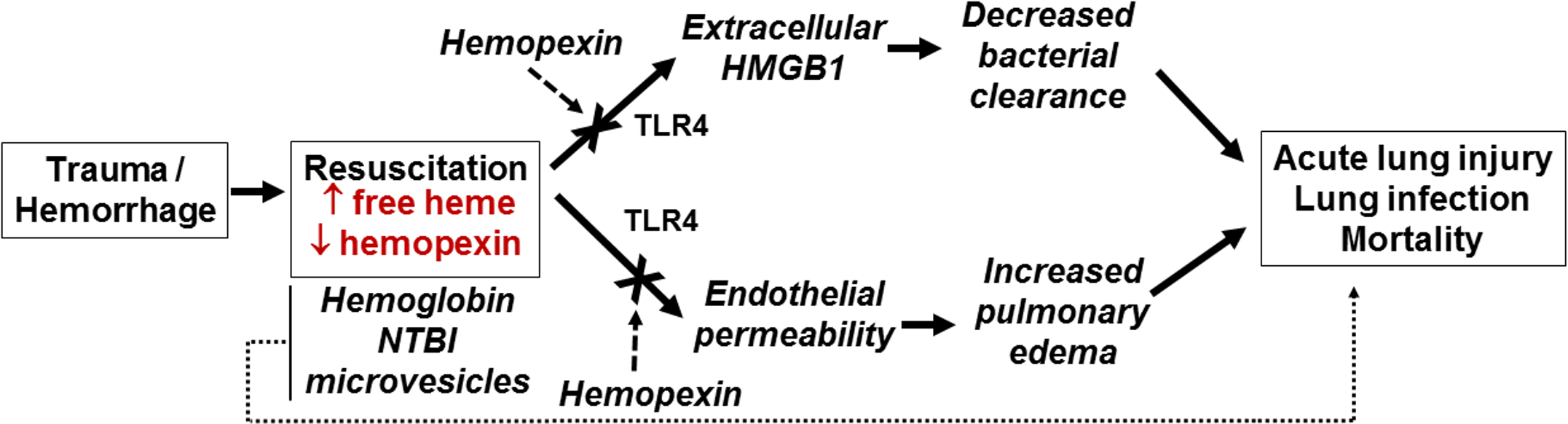 Proposed mechanisms for free-heme-dependent potentiation of lung infection after trauma hemorrhage.