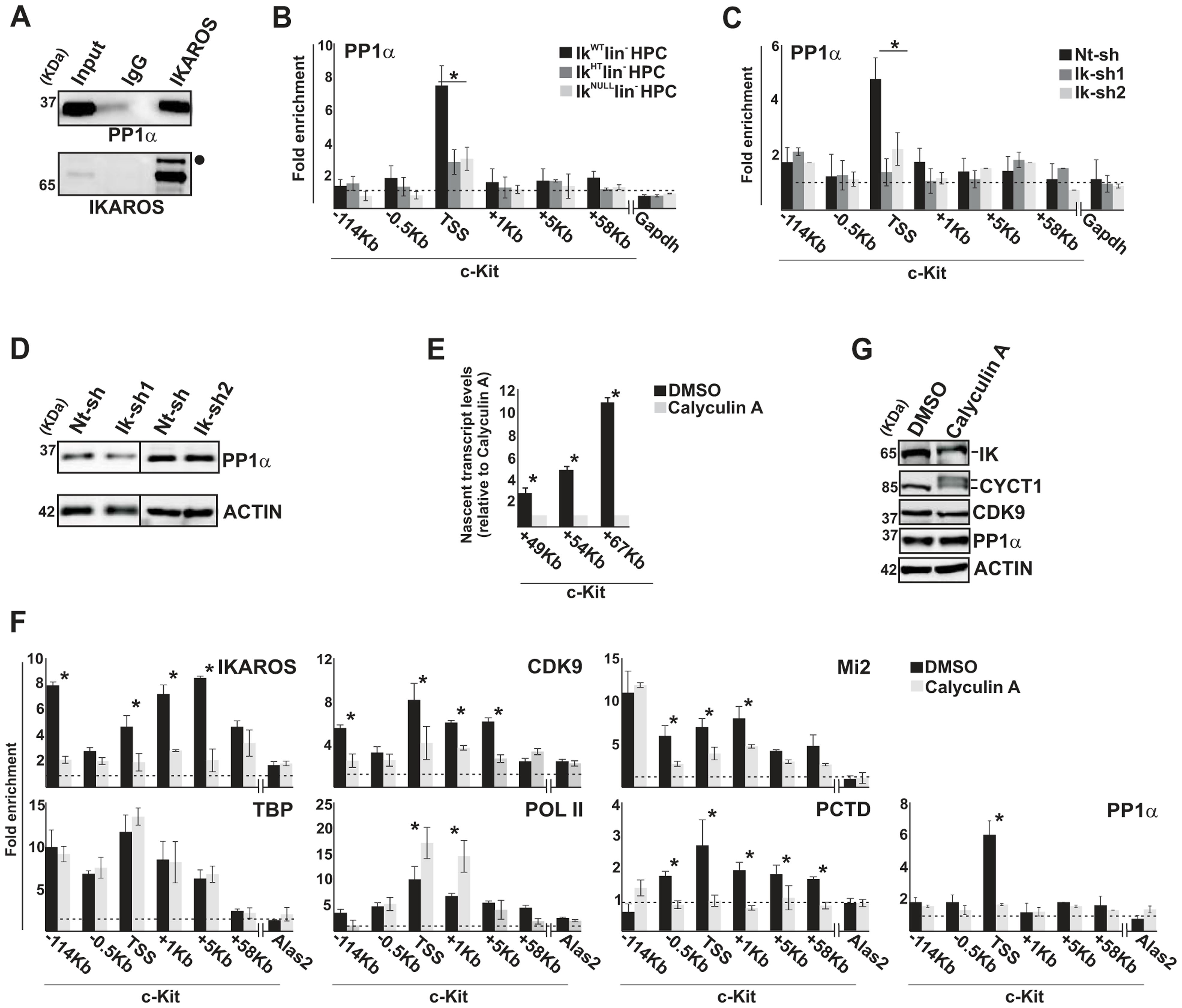 IKAROS contributes to PP1α association with the NuRD-P-TEFb complex.