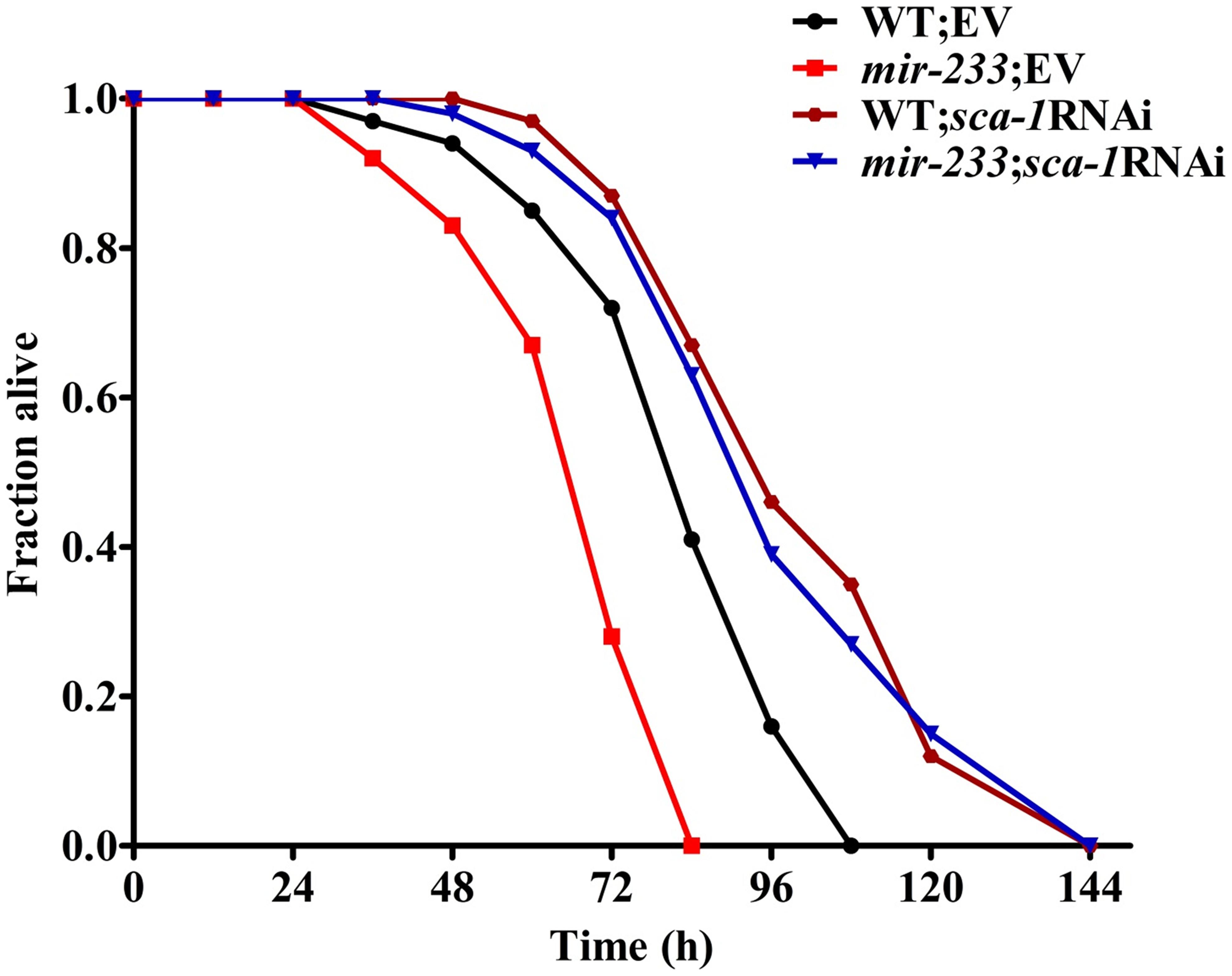<i>sca-1</i> RNAi leads to enhanced resistance to <i>P. aeruginosa</i> infection.