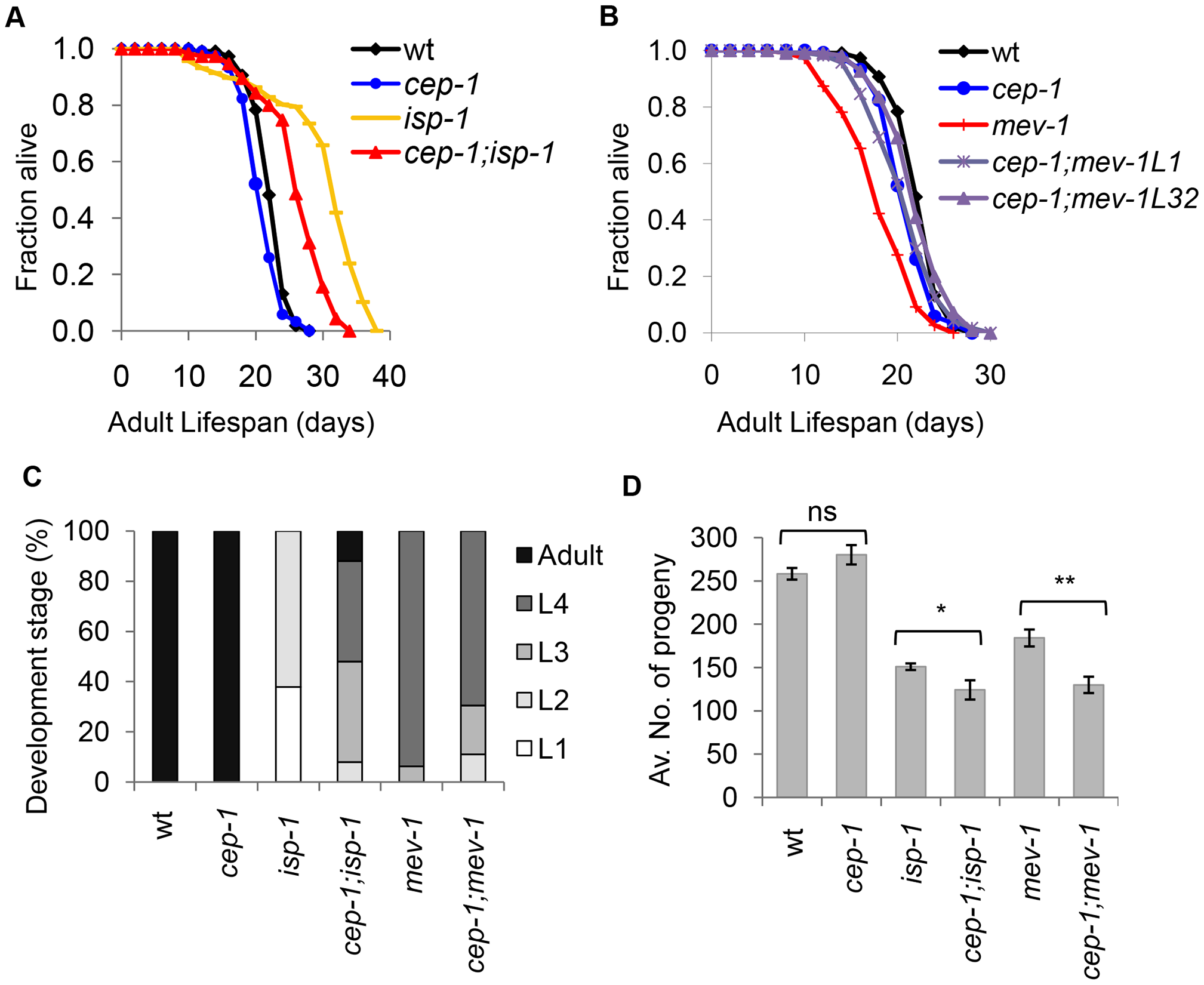 CEP-1 mediates the longevity and development of two mitochondrial mutants in <i>C. elegans</i>.