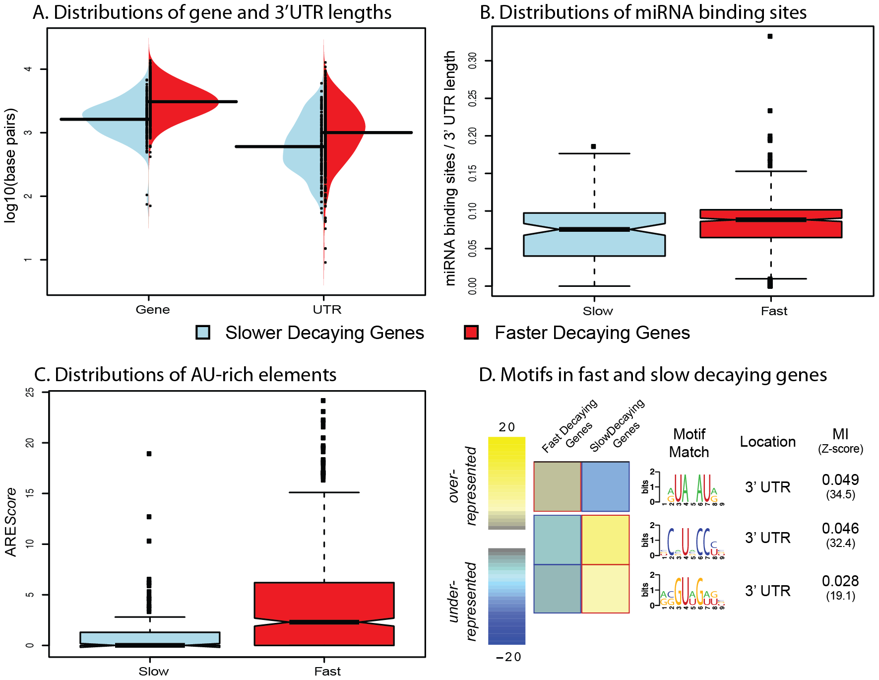 Genomic features influencing variation in decay rates across genes.