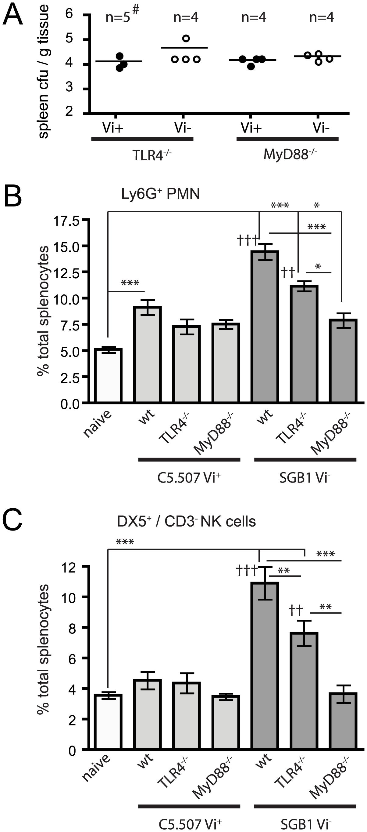 Vi modulates innate immune responses through TLR.