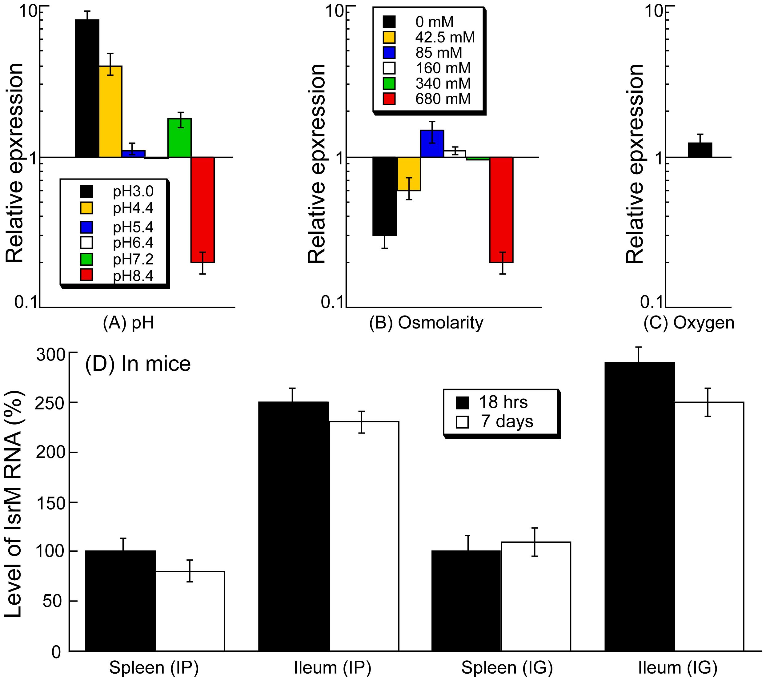 Expression of IsrM RNA in <i>Salmonella</i>.