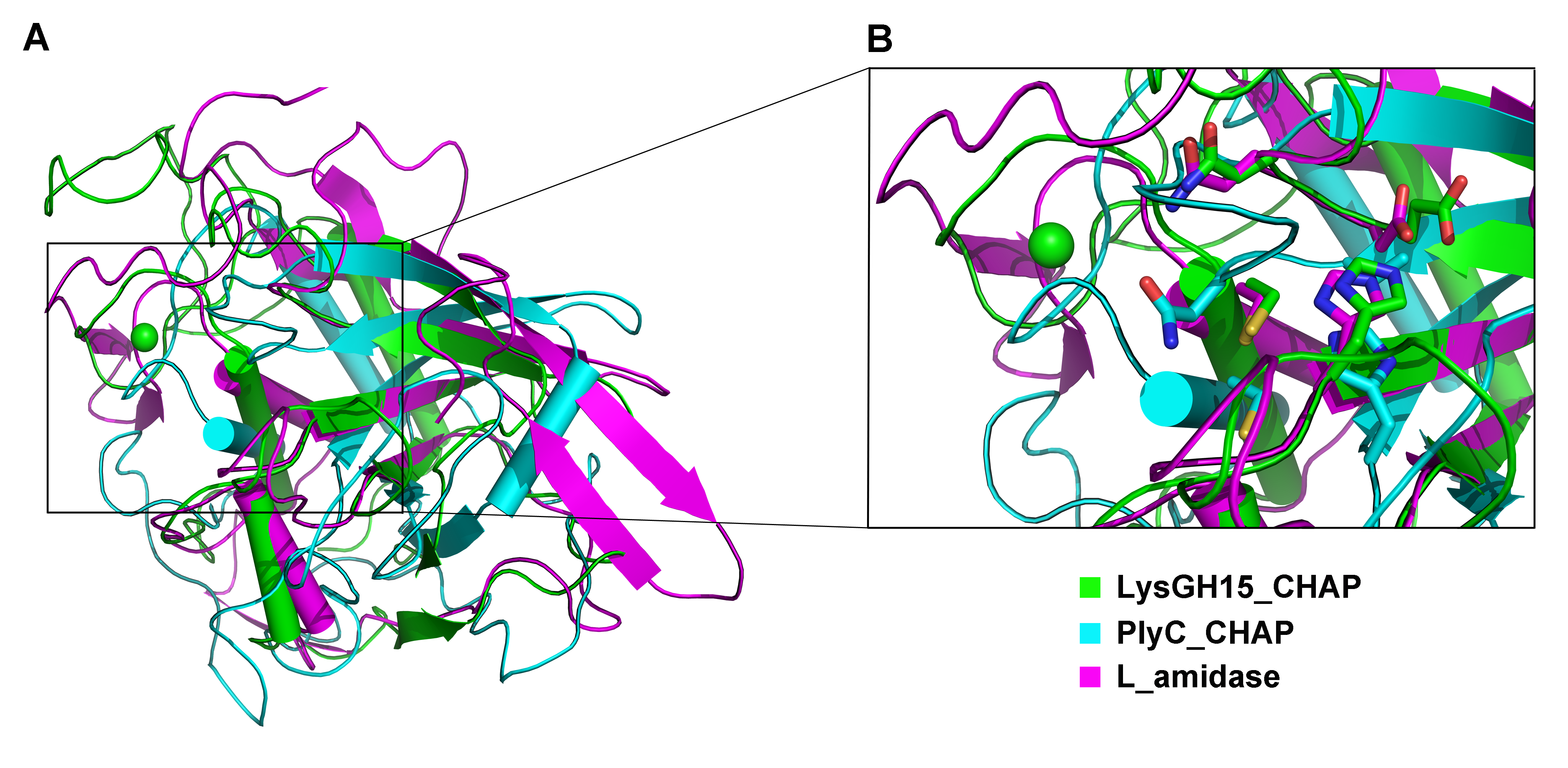 Structural comparison of the LysGH15 CHAP domain with homologous proteins.