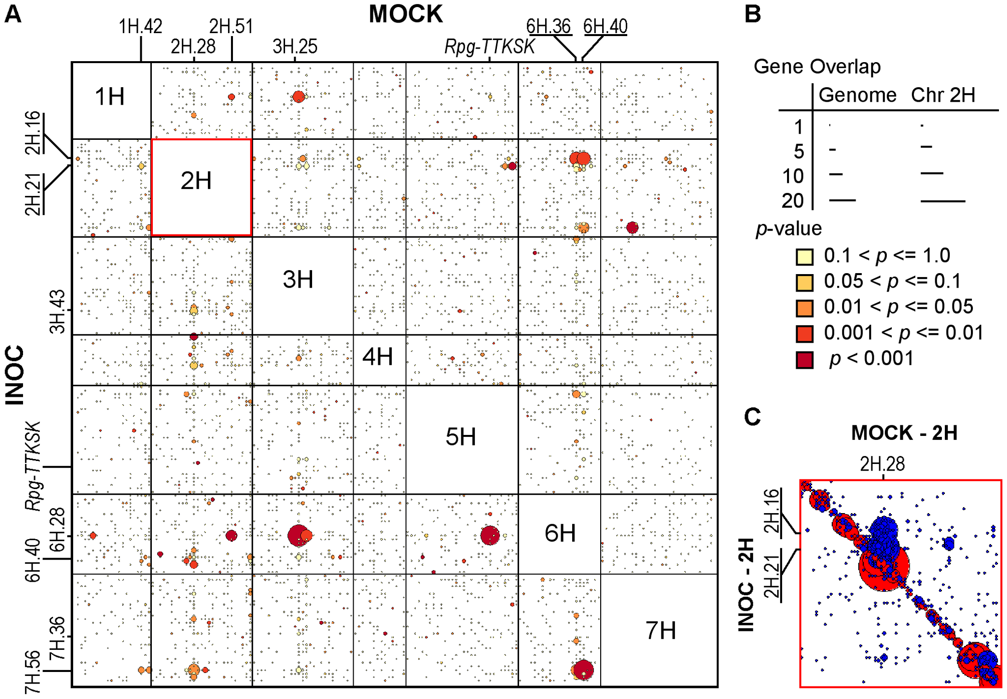 Genes from 2H.28/29, 3H.27, 6H.36/38, and 6H.40 loci are regulated by the 2H.16 <i>trans</i>-eQTL hotspot after challenge by <i>Pgt</i> race TTKSK.