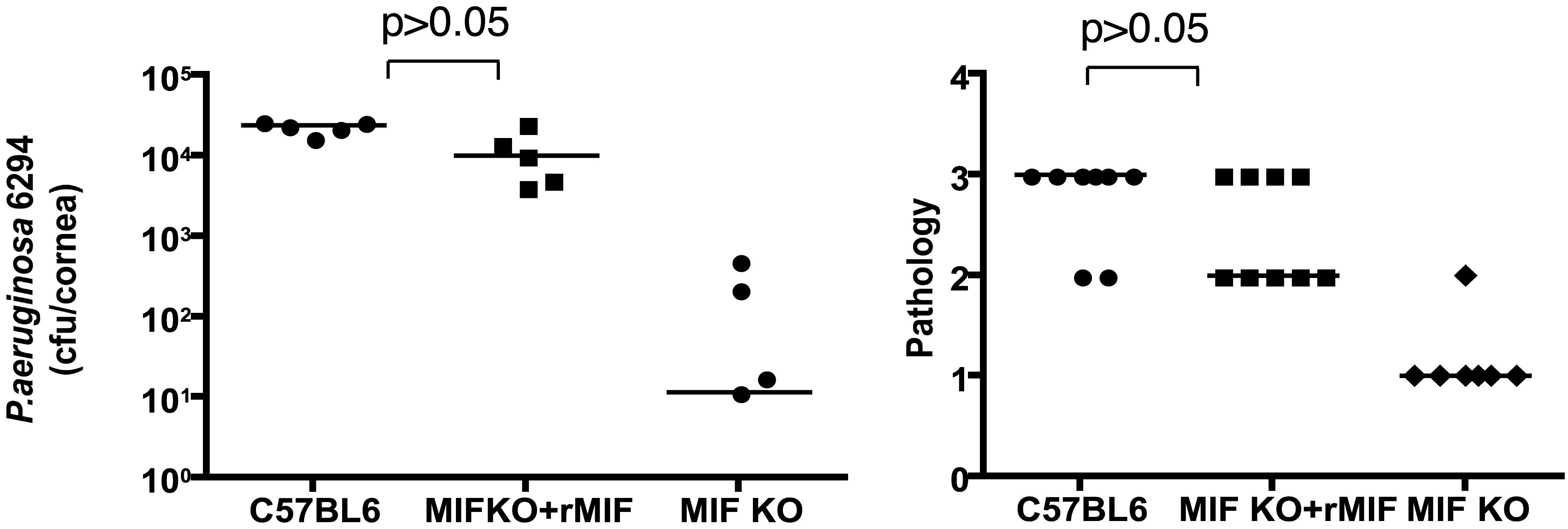 rMIF restores sensitivity to <i>P. aeruginosa</i>-induced disease in MIF KO mice.