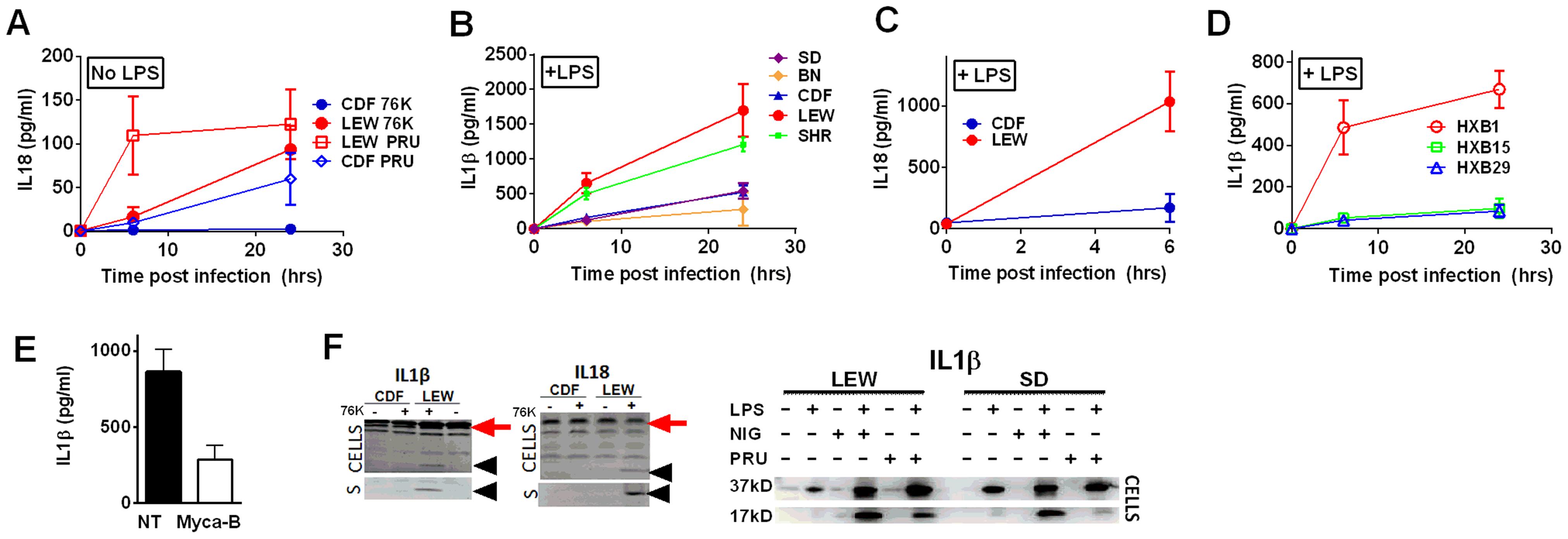 NLRP1-variant dependent cytokine cleavage and secretion.