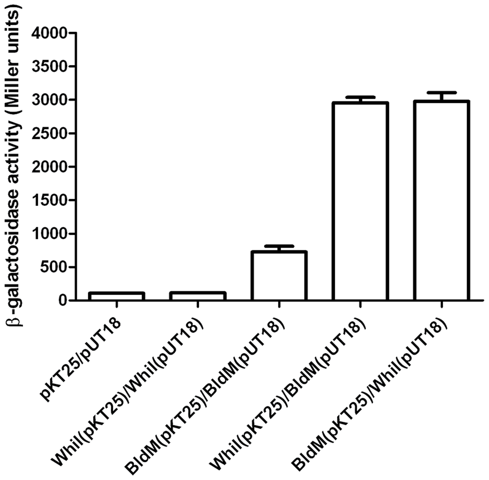 Bacterial two-hybrid analysis of BldM-WhiI interaction.