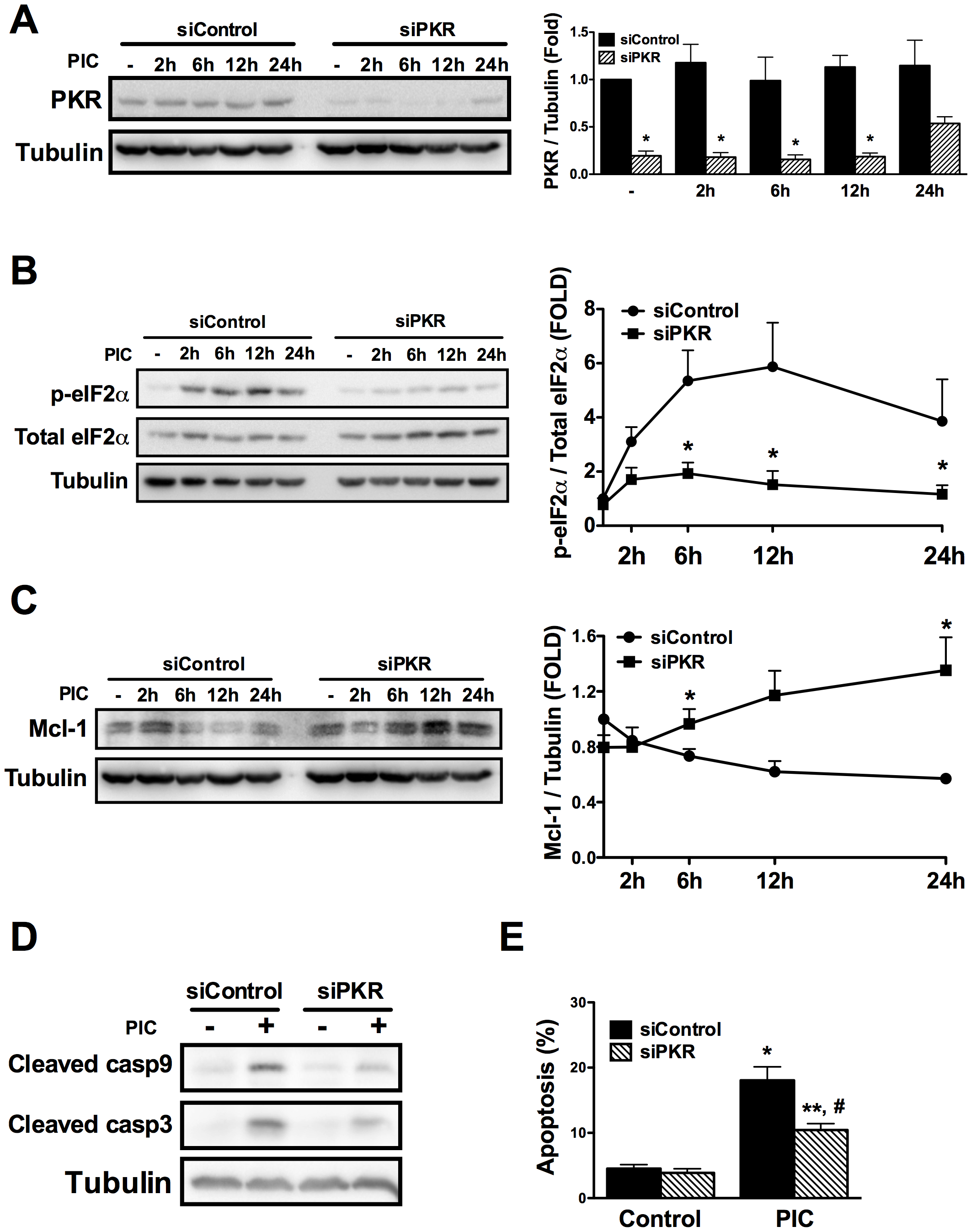 dsRNA-induced decrease in Mcl-1 protein expression depends on eIF2α phosphorylation by PKR.