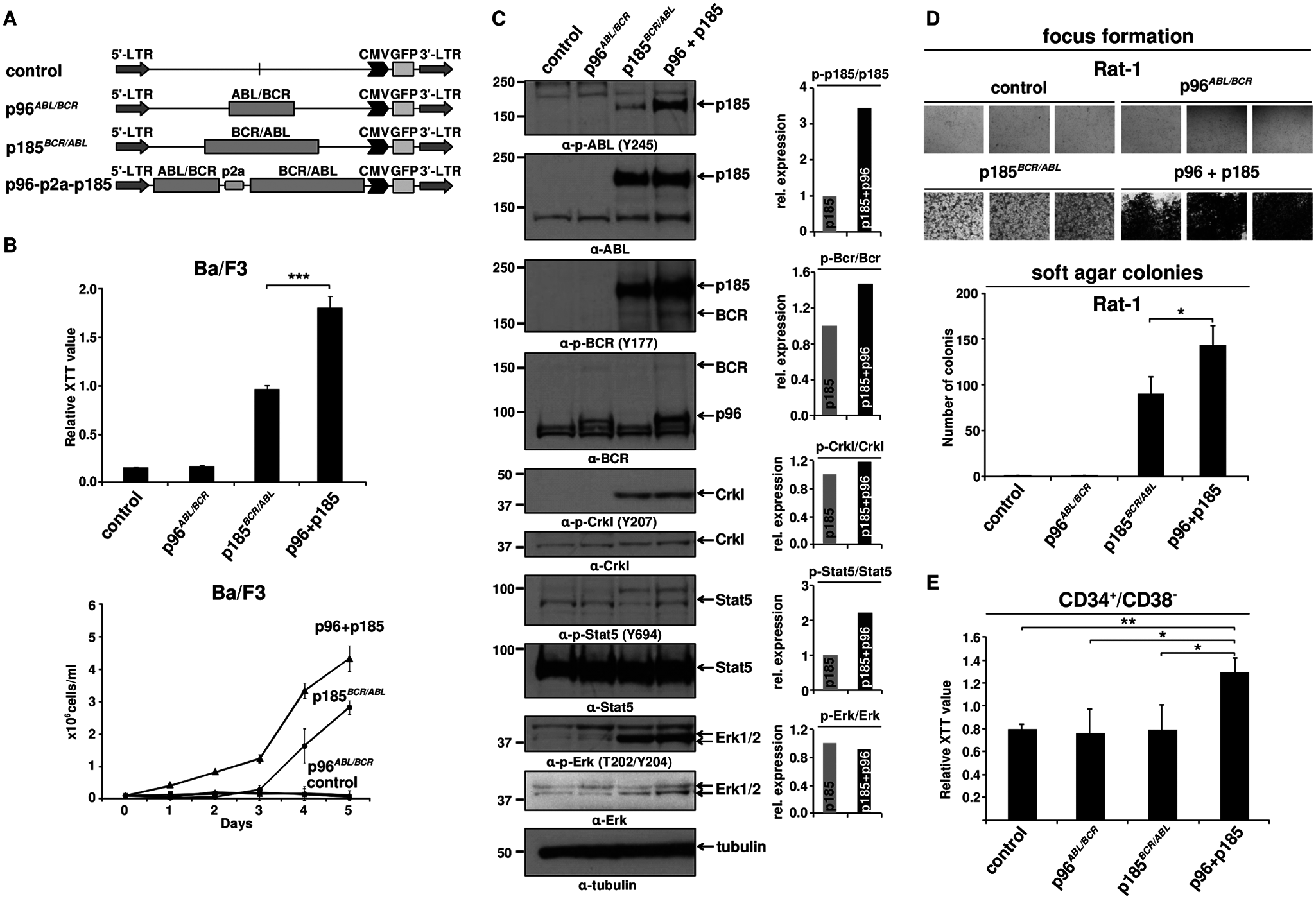 Effect of p96<sup><i>ABL/BCR</i></sup> on the proliferation and transformation capacity of p185<sup><i>BCR/ABL</i></sup>-positive cells.