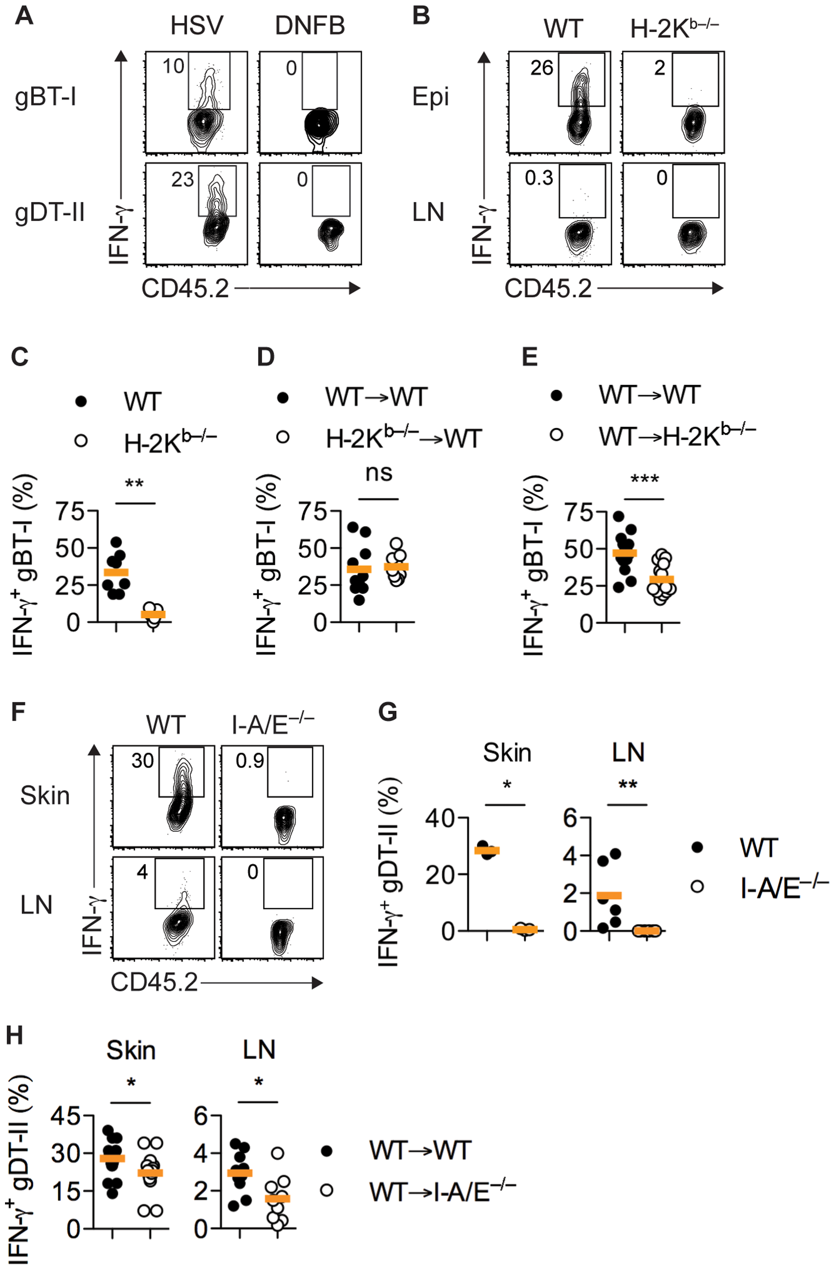 MHC-dependent activation of T<sub>EFF</sub> cells by APCs.