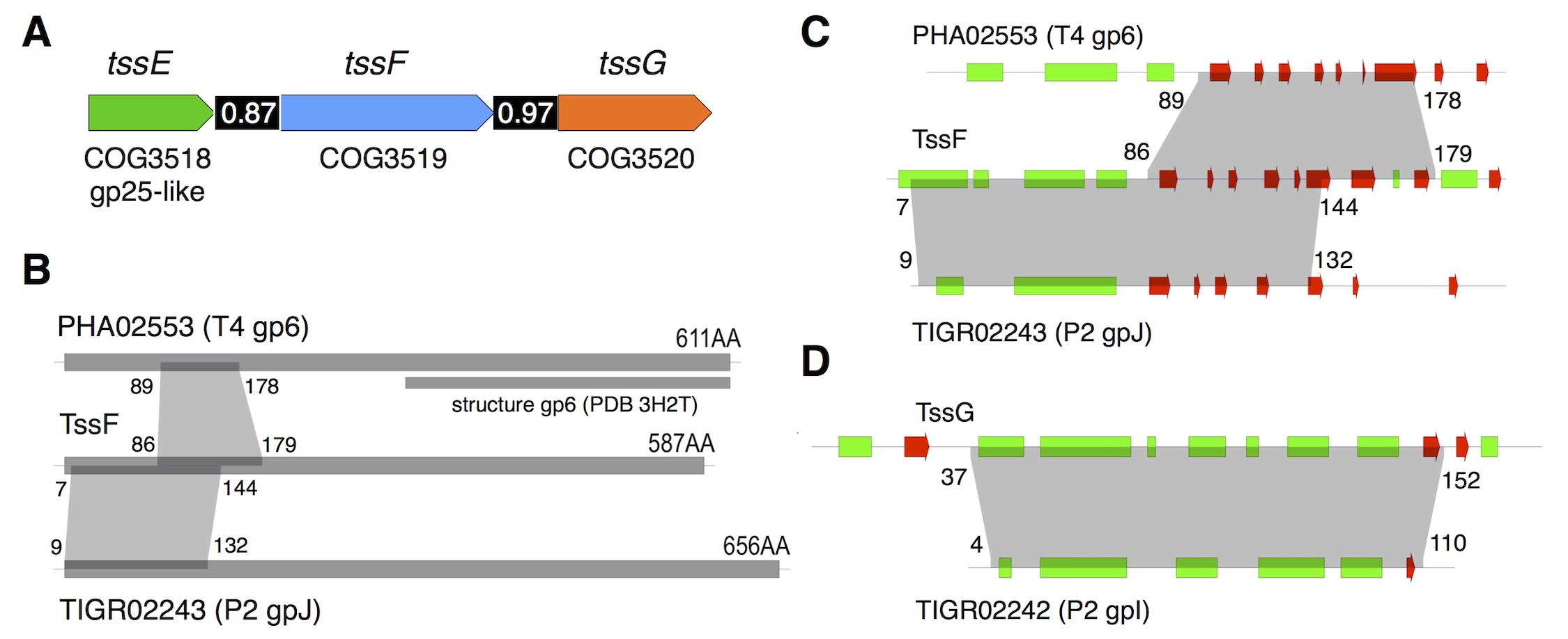 <i>tssE</i>, <i>tssF and tssG</i> genes co-occur in T6SS genes clusters and share homologies with phage baseplate components.