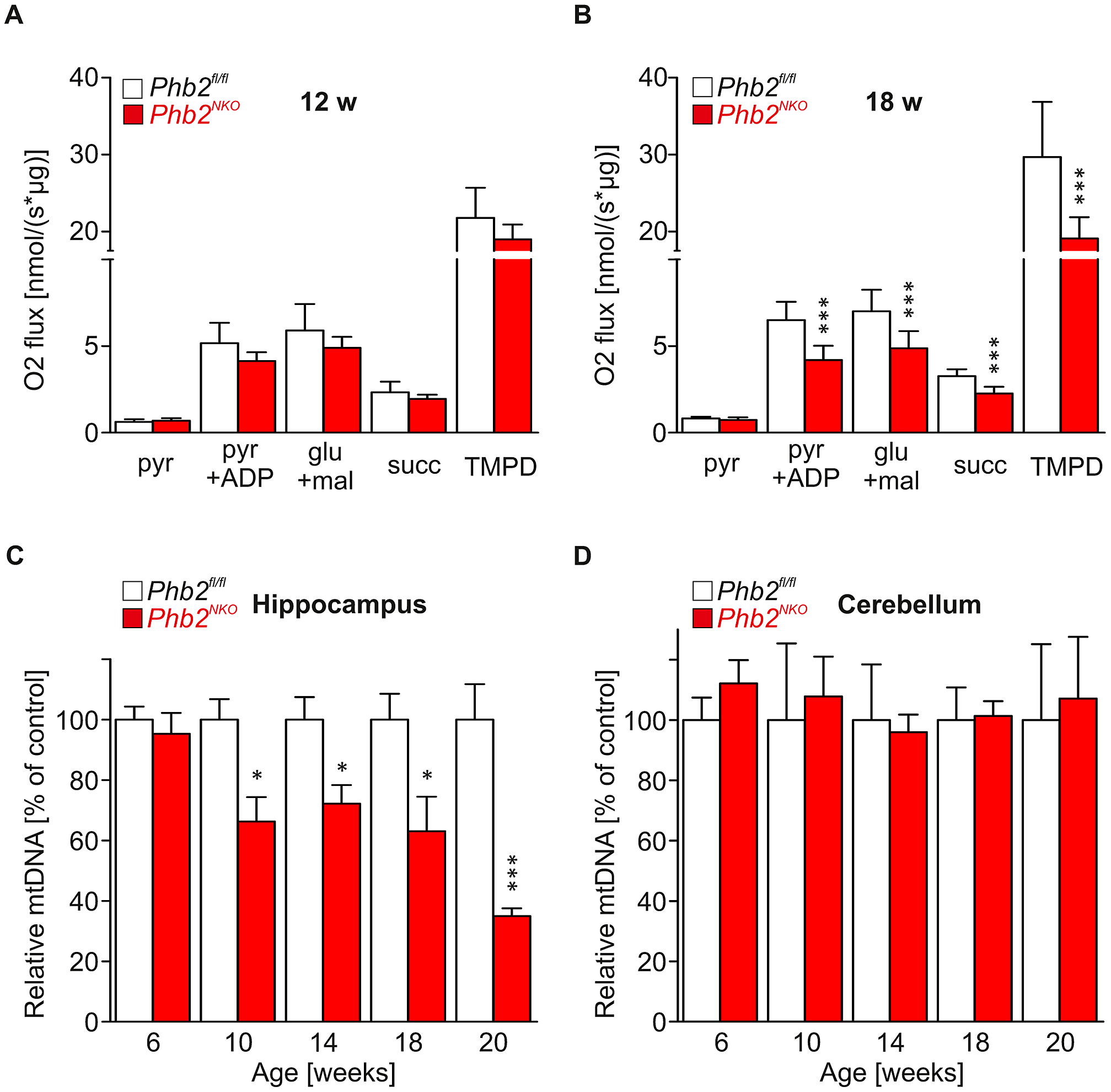 Late-onset mtDNA loss and respiratory dysfunction in <i>Phb2<sup>NKO</sup></i> mice.