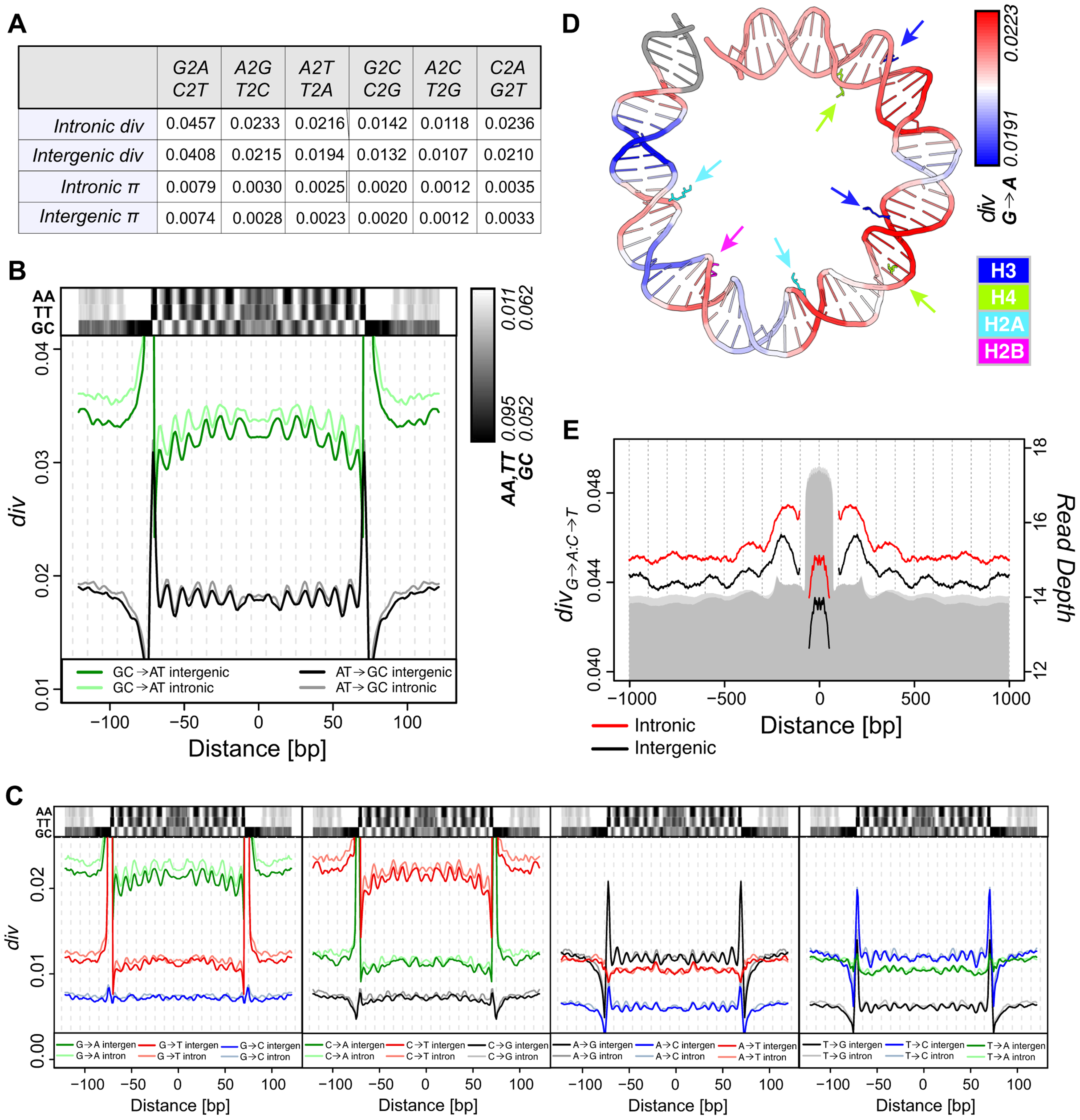 Divergence on the <i>melanogaster</i> lineage mirrors nucleosome sequence preferences.