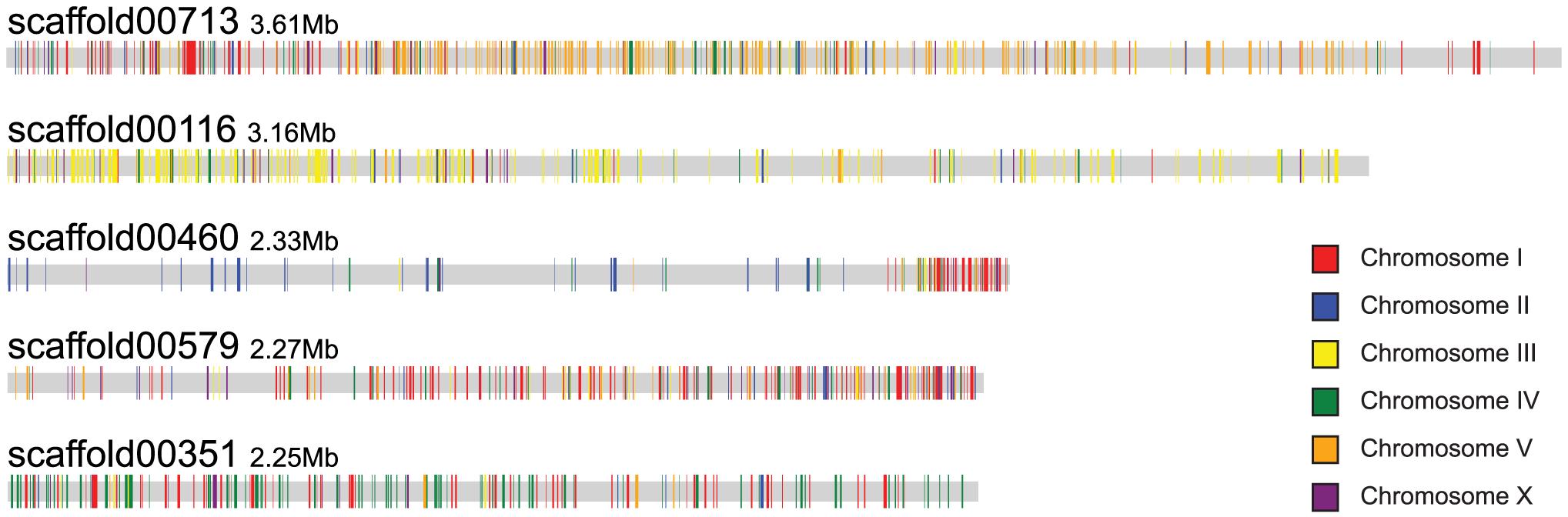 Scaffolds of <i>B. xylophilus</i> display a macrosyntenic relationship with chromosomes of <i>C. elegans</i>.