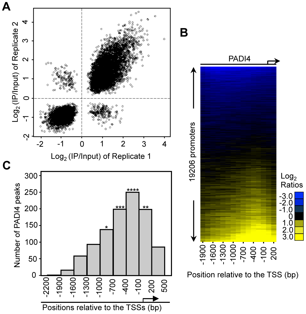 PADI4 is enriched in the gene promoter region near the TSSs.