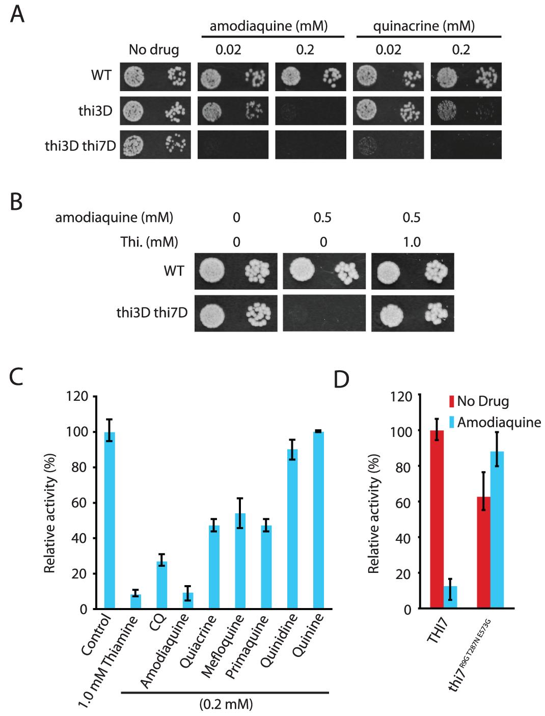 Other antimalarials inhibit thiamine transporters.