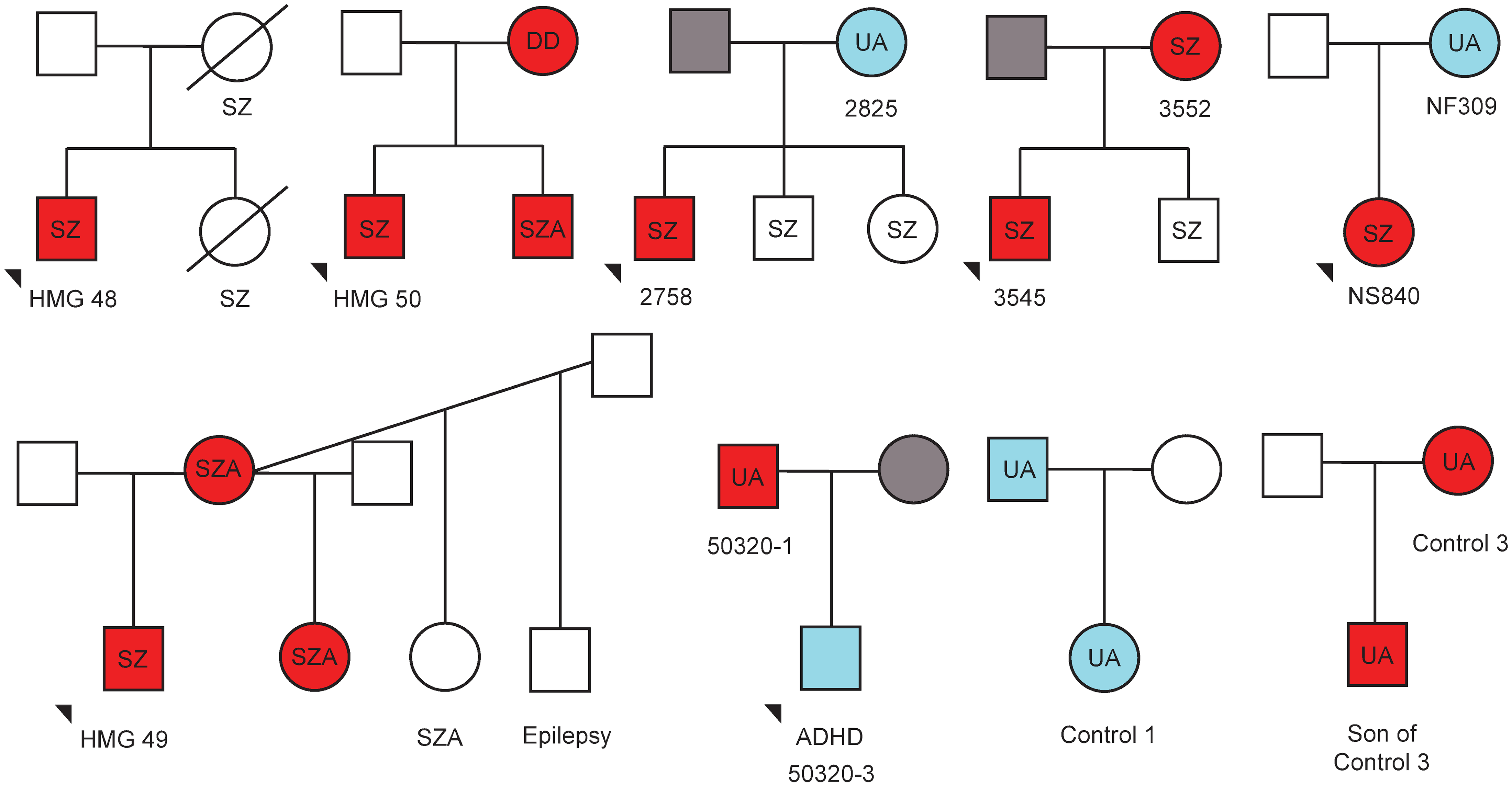 Family trees depicting transmission of 15q11.2-q13.3 duplications and neuropsychiatric phenotypes.