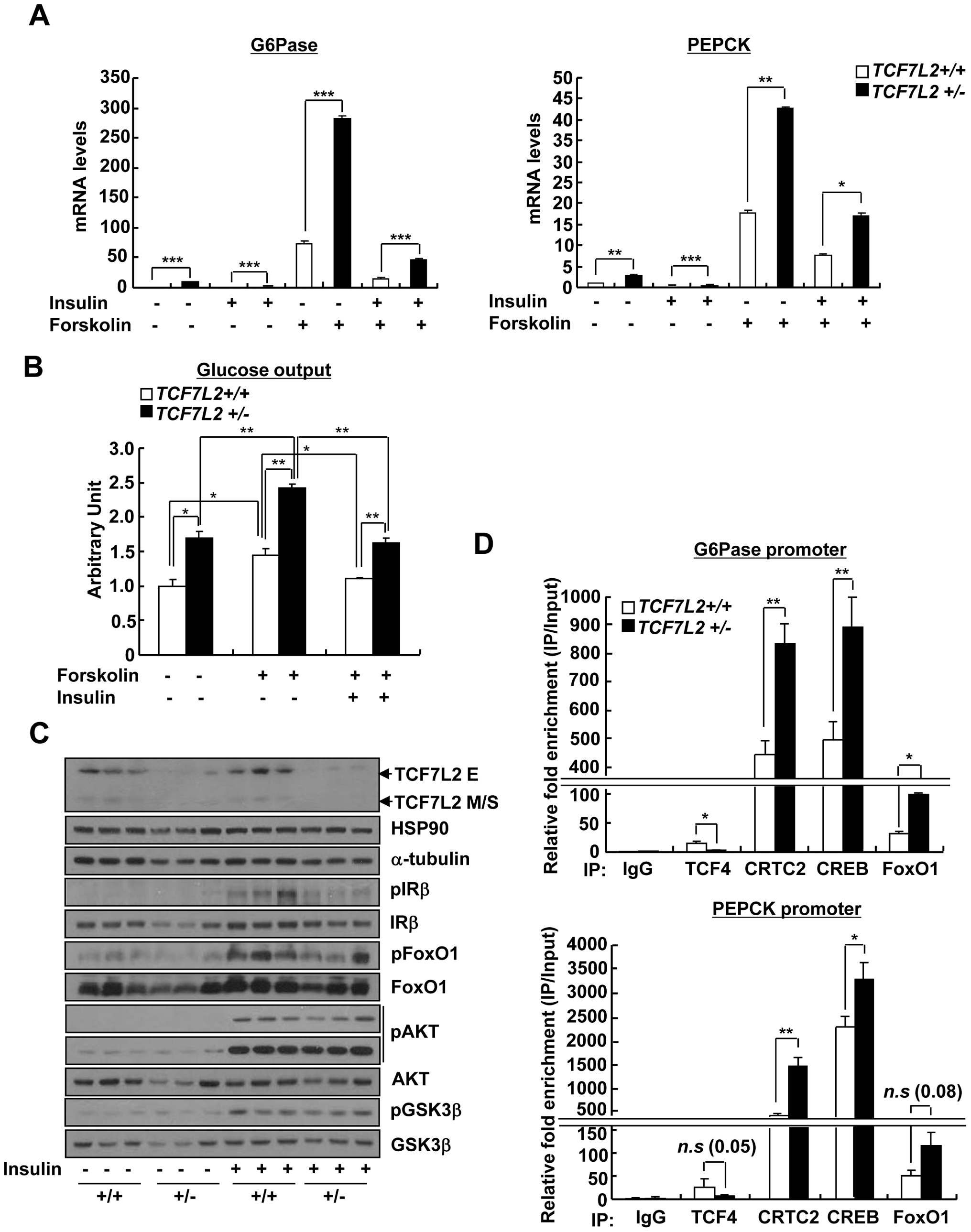 Chronic depletion of TCF7L2 promotes increased glucose production and gluconeogenic gene expression in hepatocytes.