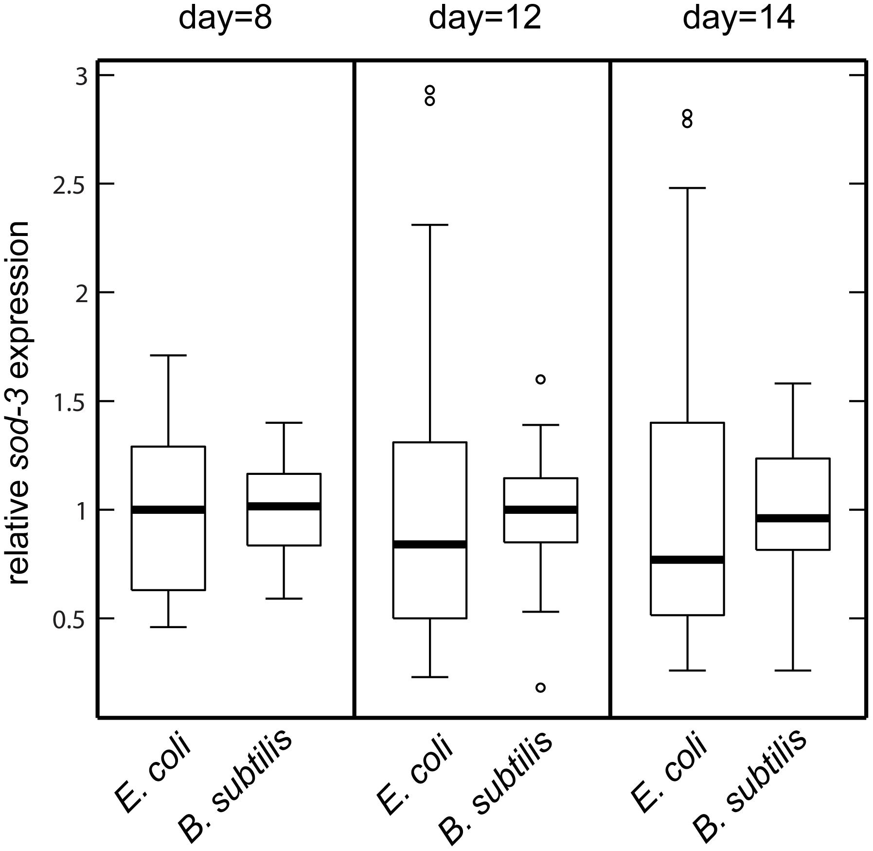 <i>sod-3</i> expression variability is lower for worms fed <i>B. subtilis</i> compared to worms fed <i>E. coli</i>.