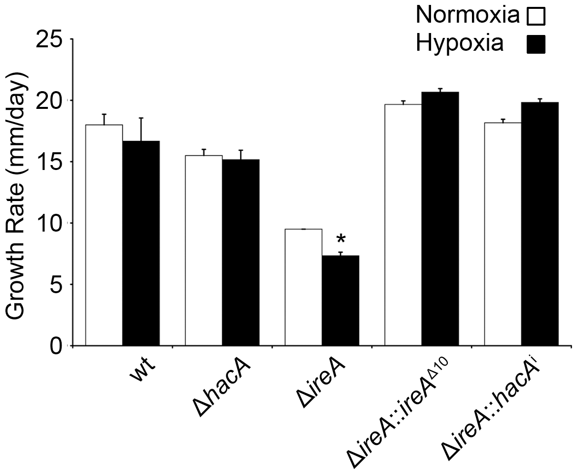 IreA contributes to growth in hypoxia.