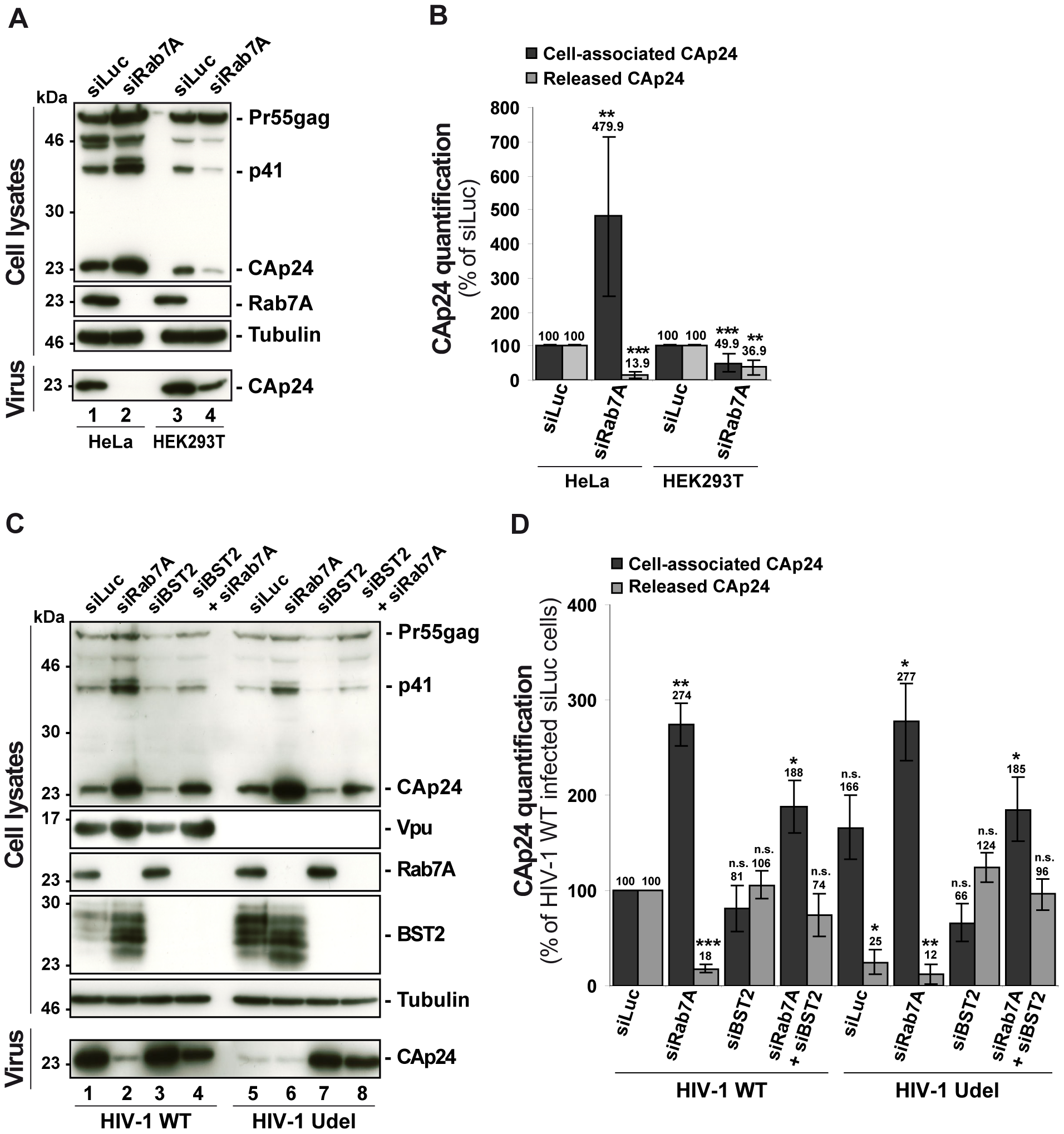 Reduced HIV-1 release after depletion of Rab7A is related to expression of the restriction factor BST2.