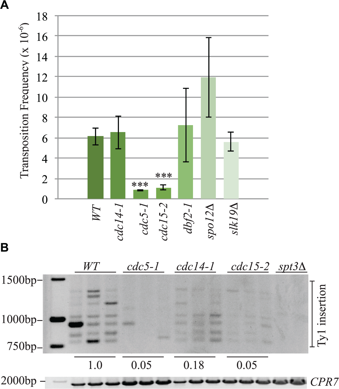 The mitotic exit network has a role in Ty1 transposition.