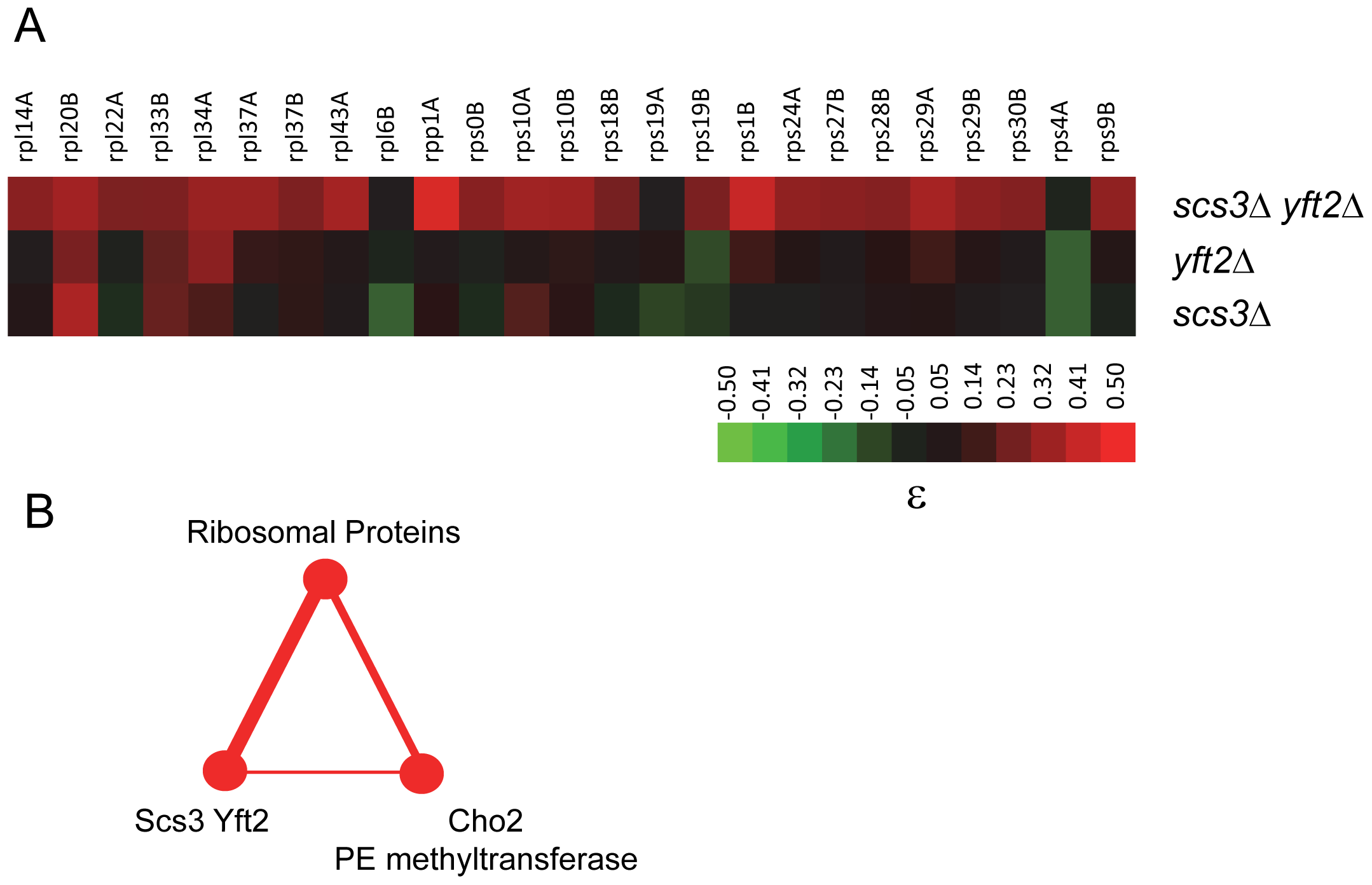 Genetic interactions of <i>SCS3</i> and <i>YFT2</i> linking protein and phospholipid synthesis.