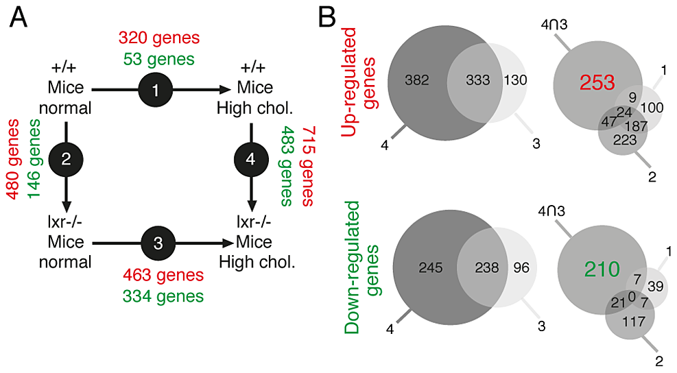 Identification of genes associated with the occurence of PIN lesions.