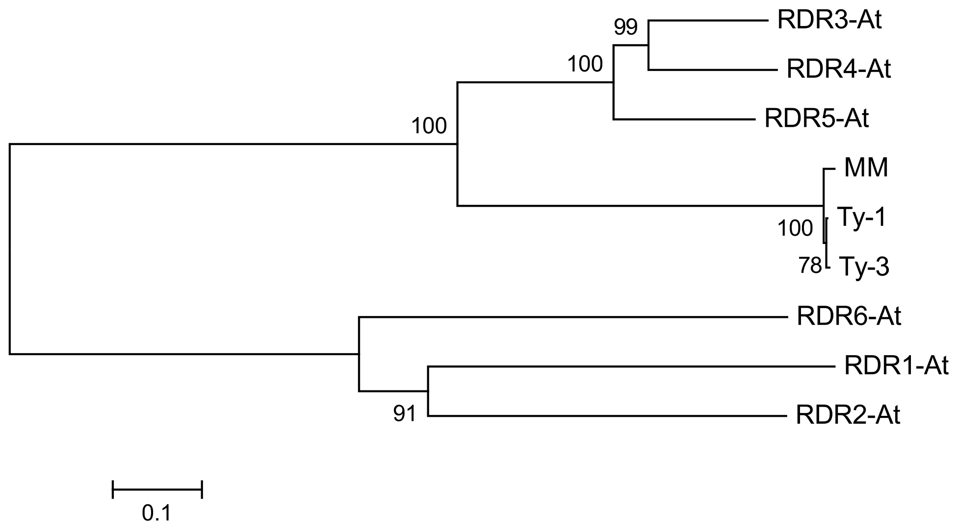 Neighbour joining tree of protein sequences of <i>A. thaliana</i> RDR1-6, <i>Ty-1</i>, <i>Ty-3</i>, and the susceptible Moneymaker allele (MM).
