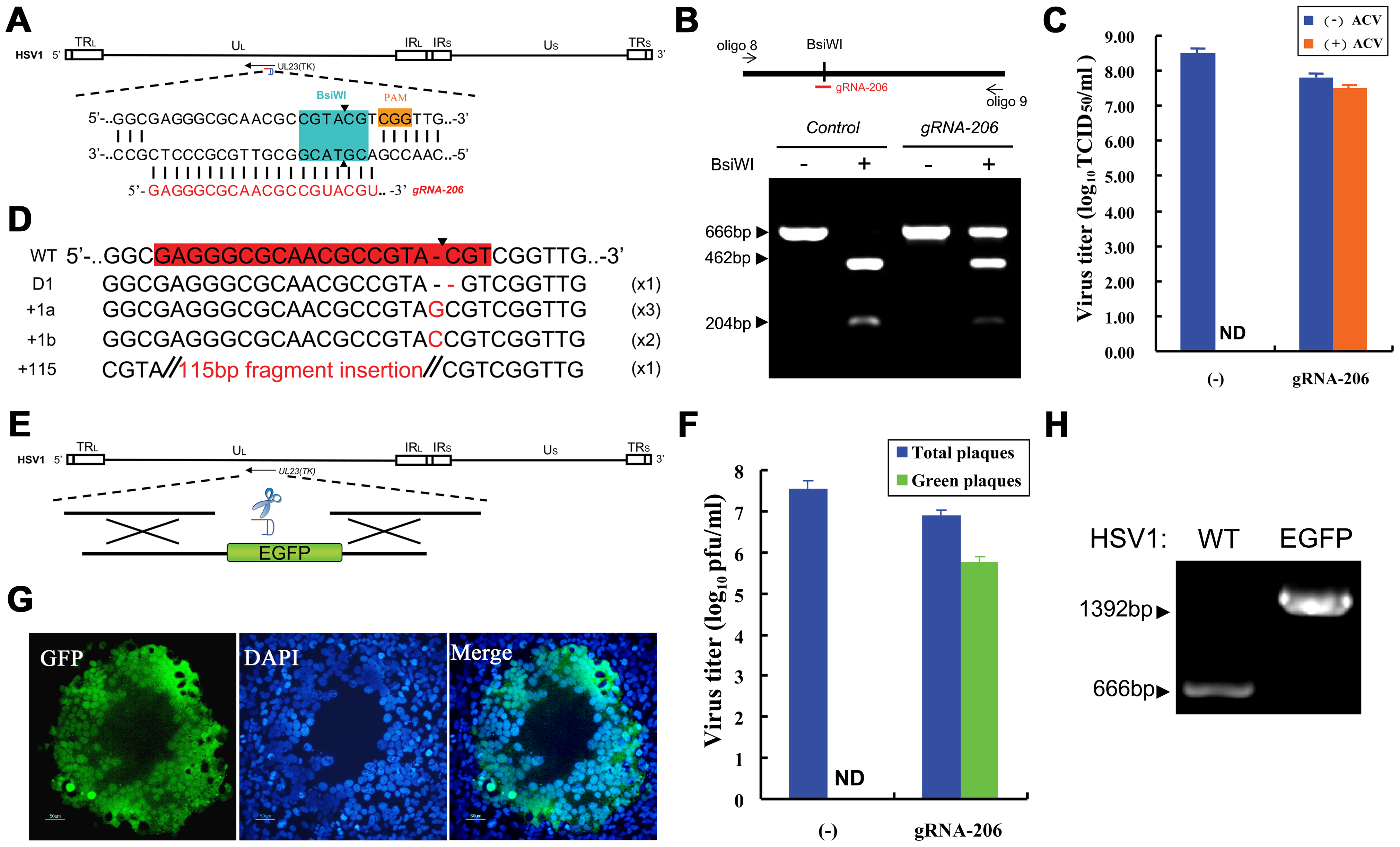 Herpes simplex viral genome editing targeted by the CRISPR-Cas system.