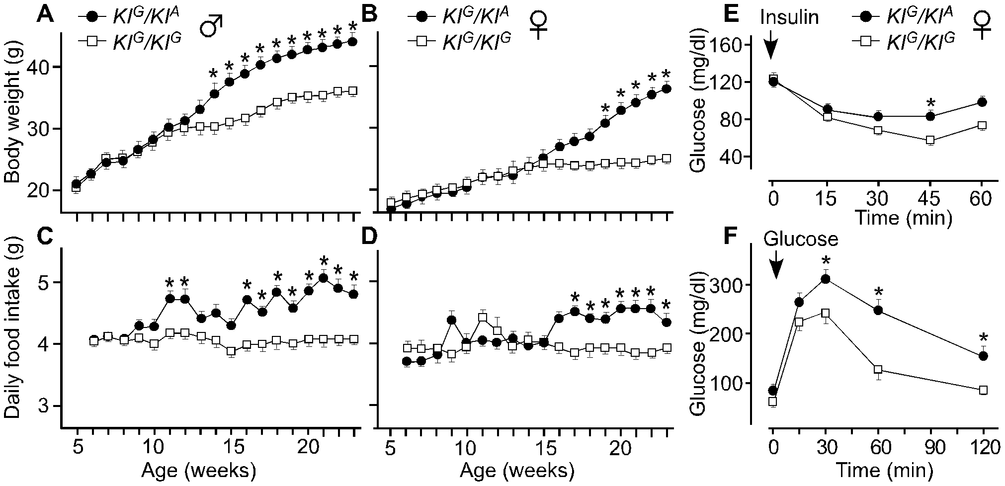 Body weight, daily food intake, and insulin and glucose tolerance of knockin mice.