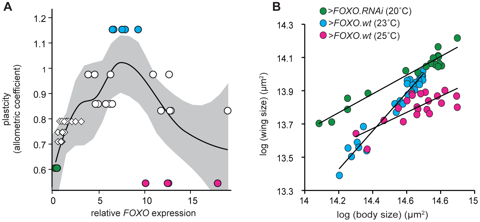 There is a non-linear relationship between <i>FOXO</i> expression and nutritional plasticity.