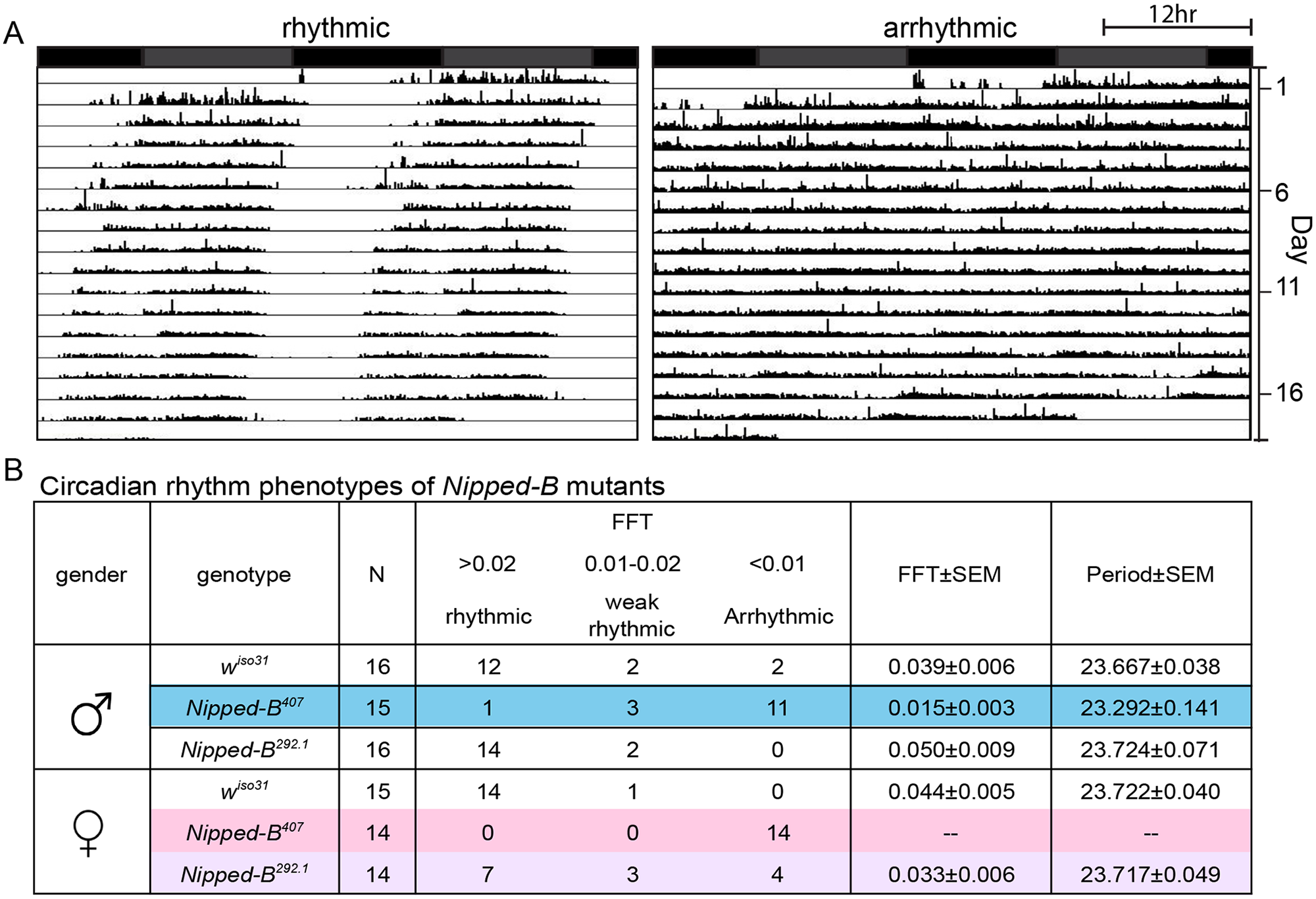 <i>Nipped-B</i> heterozygous mutants are arrhythmic.