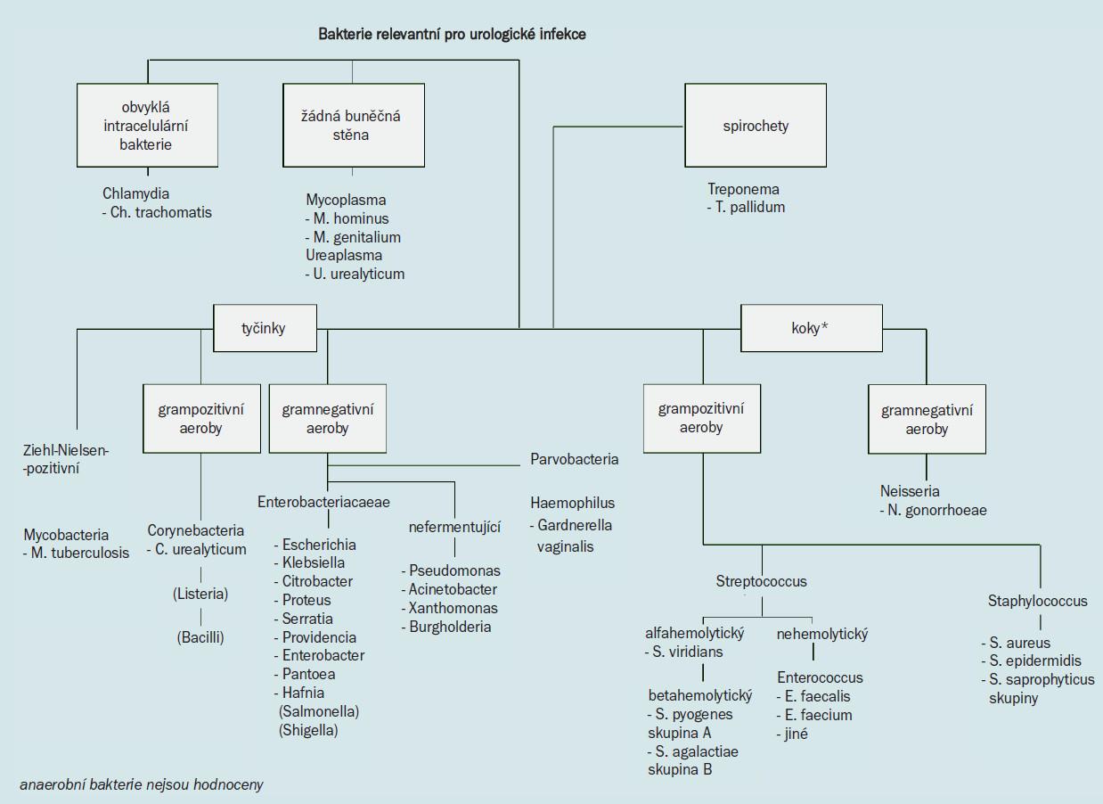 Schéma. Bakterie relevantní pro urologické infekce.