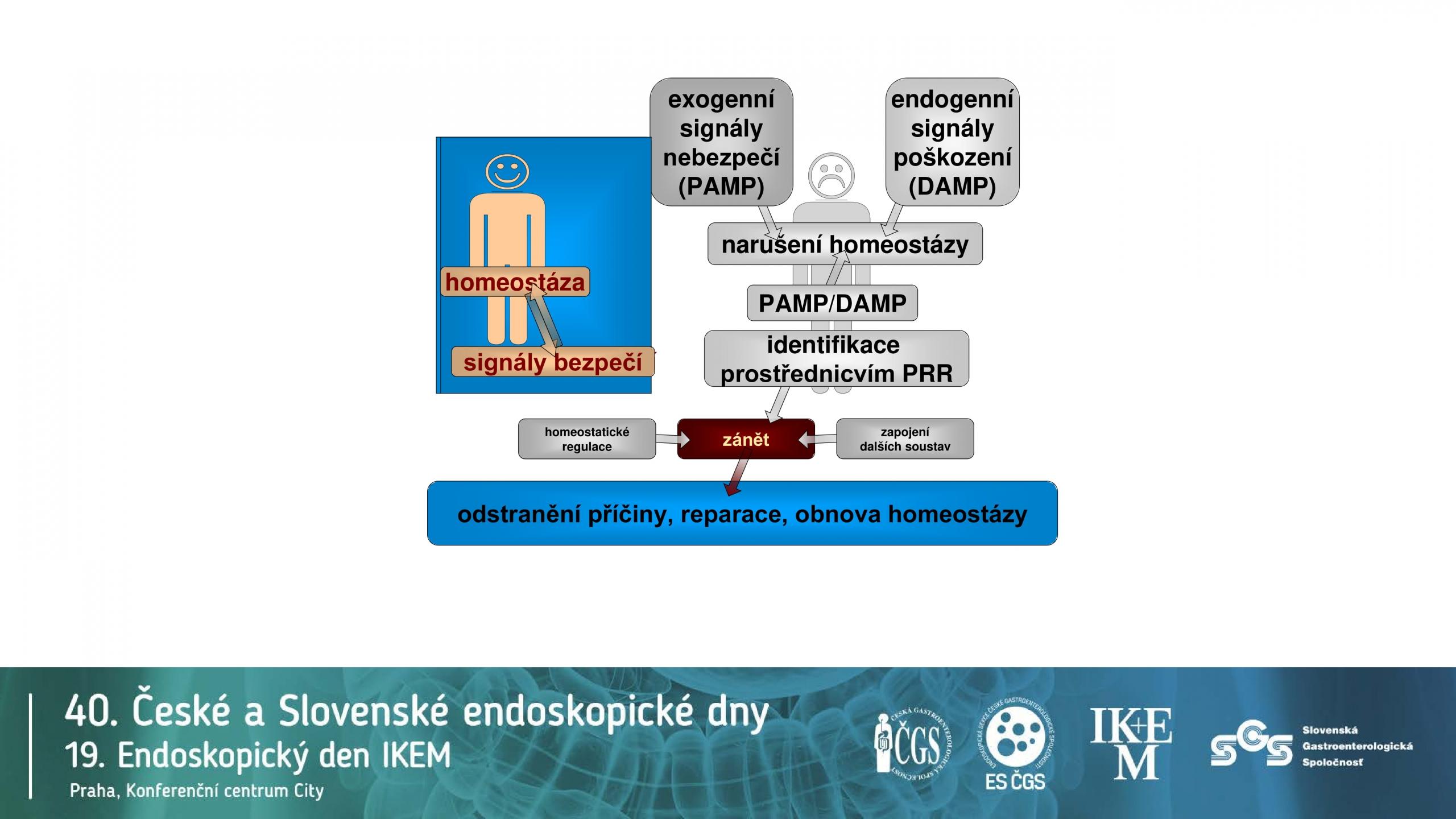Klíčová úloha IL12/IL23 v patogenezi IBD - 4