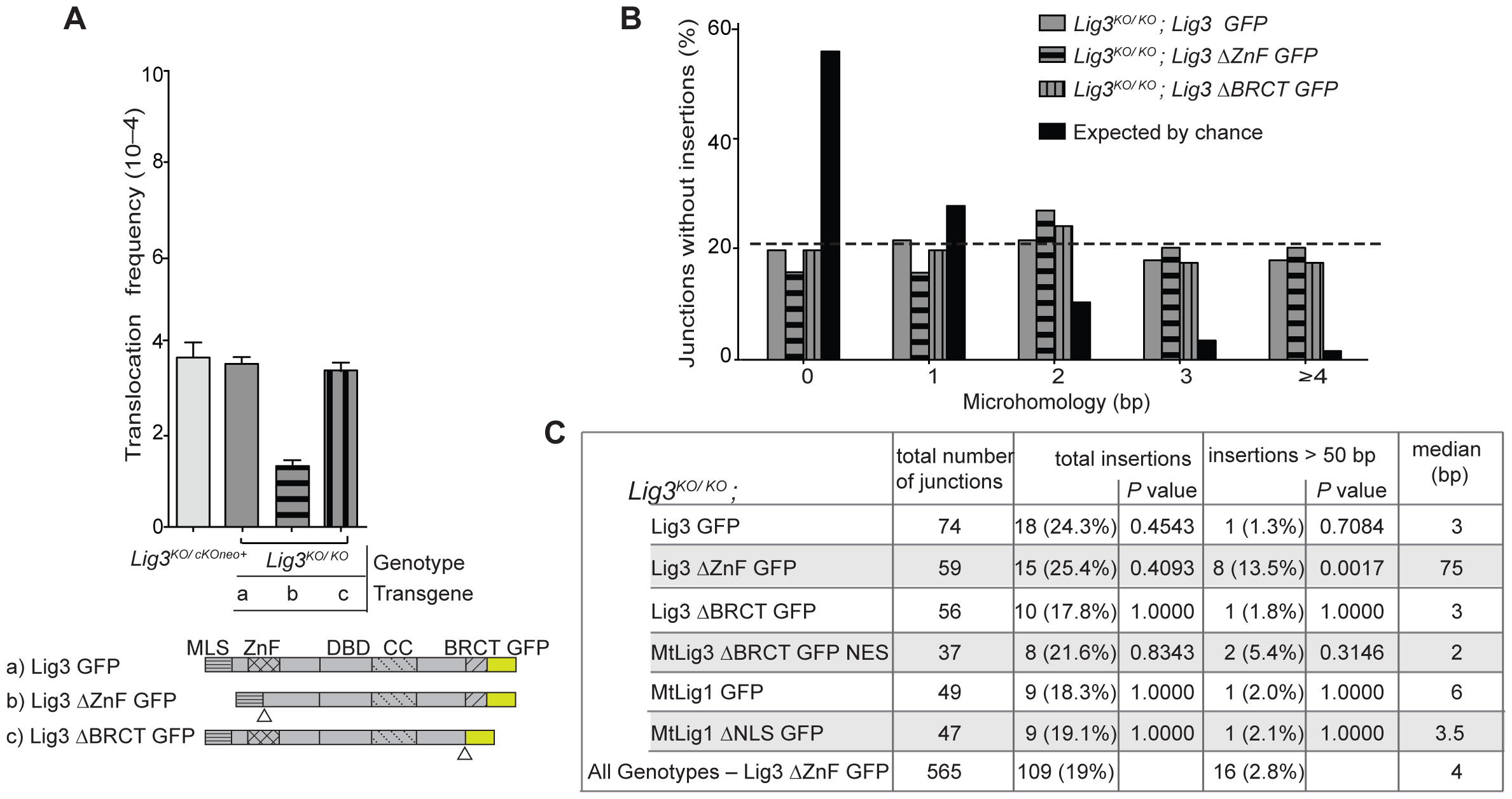 Analysis of Lig3 domain requirements in translocation formation.