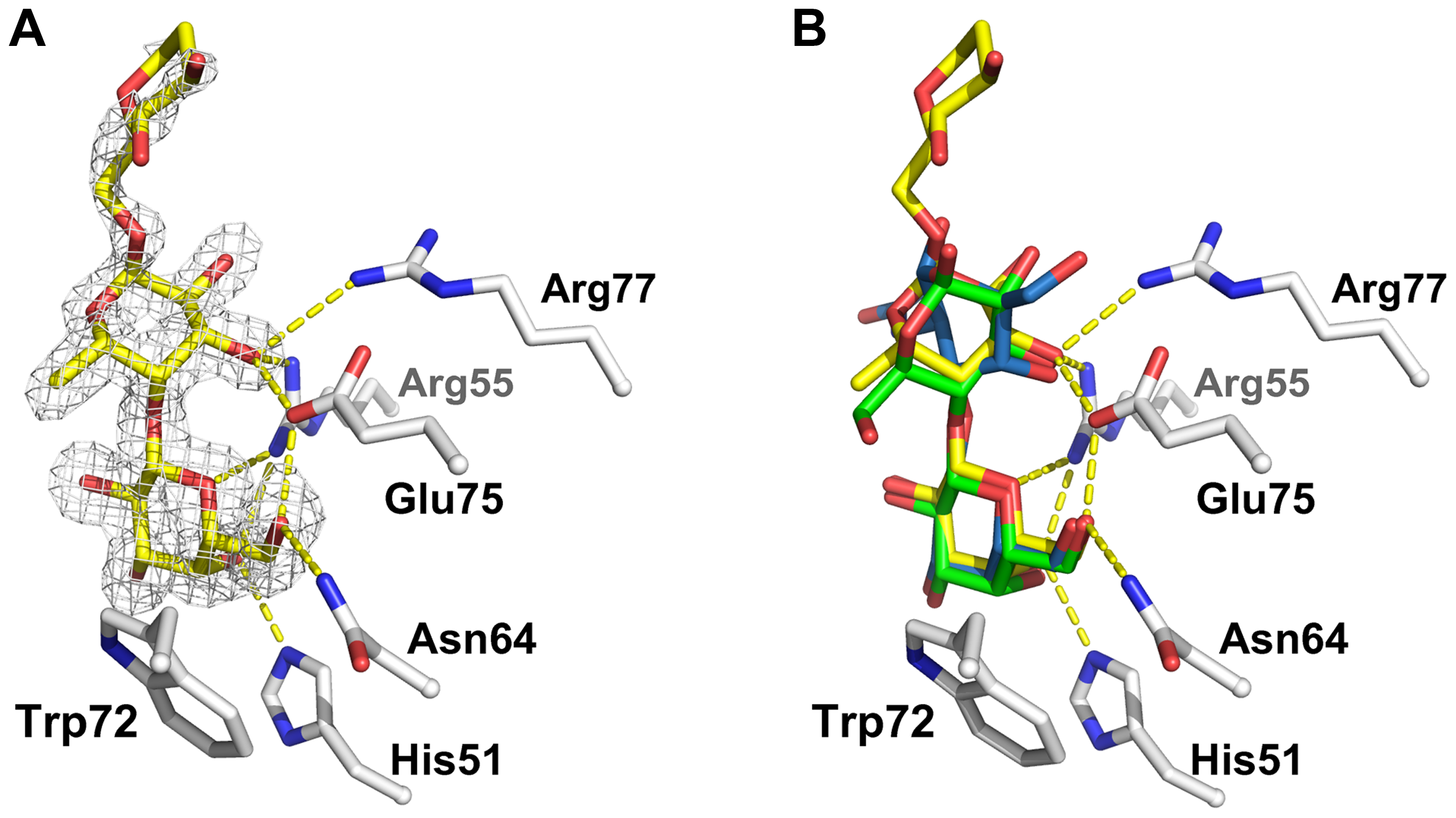 Detailed view of the interaction between CGL2 and Galβ1,4Fucα1,6GlcNAc (A) and comparison with two other CGL2/carbohydrate complexes (B).