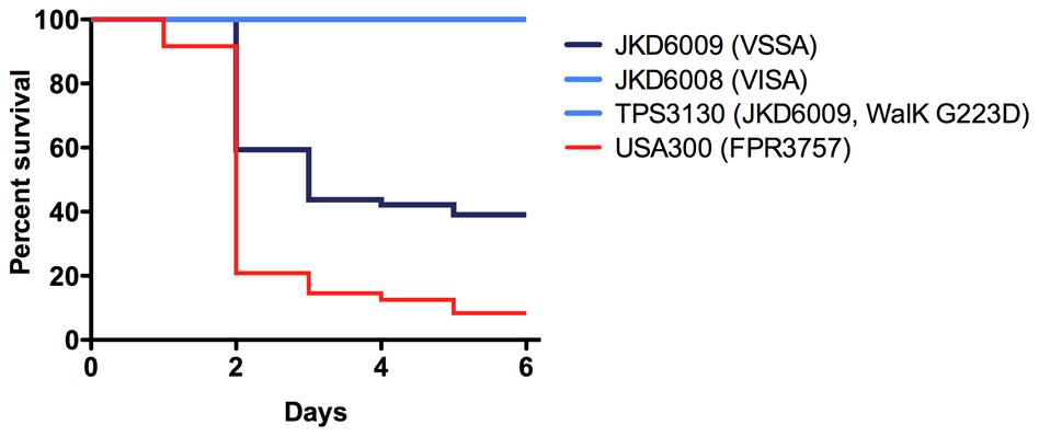 <i>Galleria mellonella</i> virulence analysis of clinical and <i>walK</i> mutant strains.
