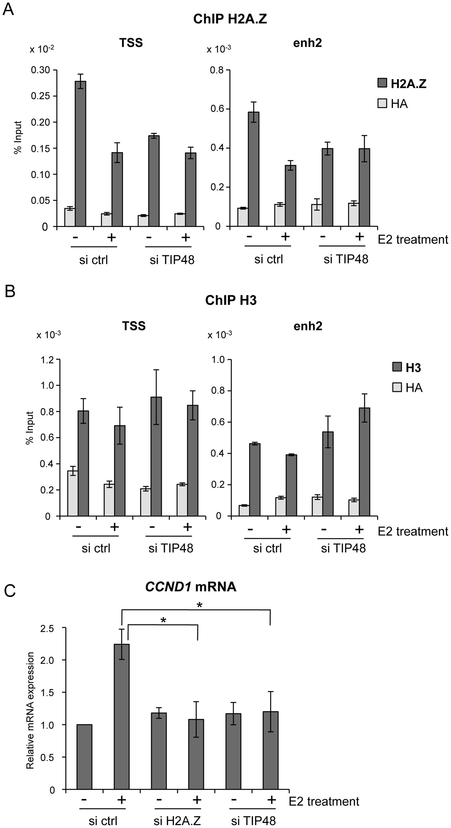 TIP48 regulates estrogen-activated transcription via H2A.Z release.