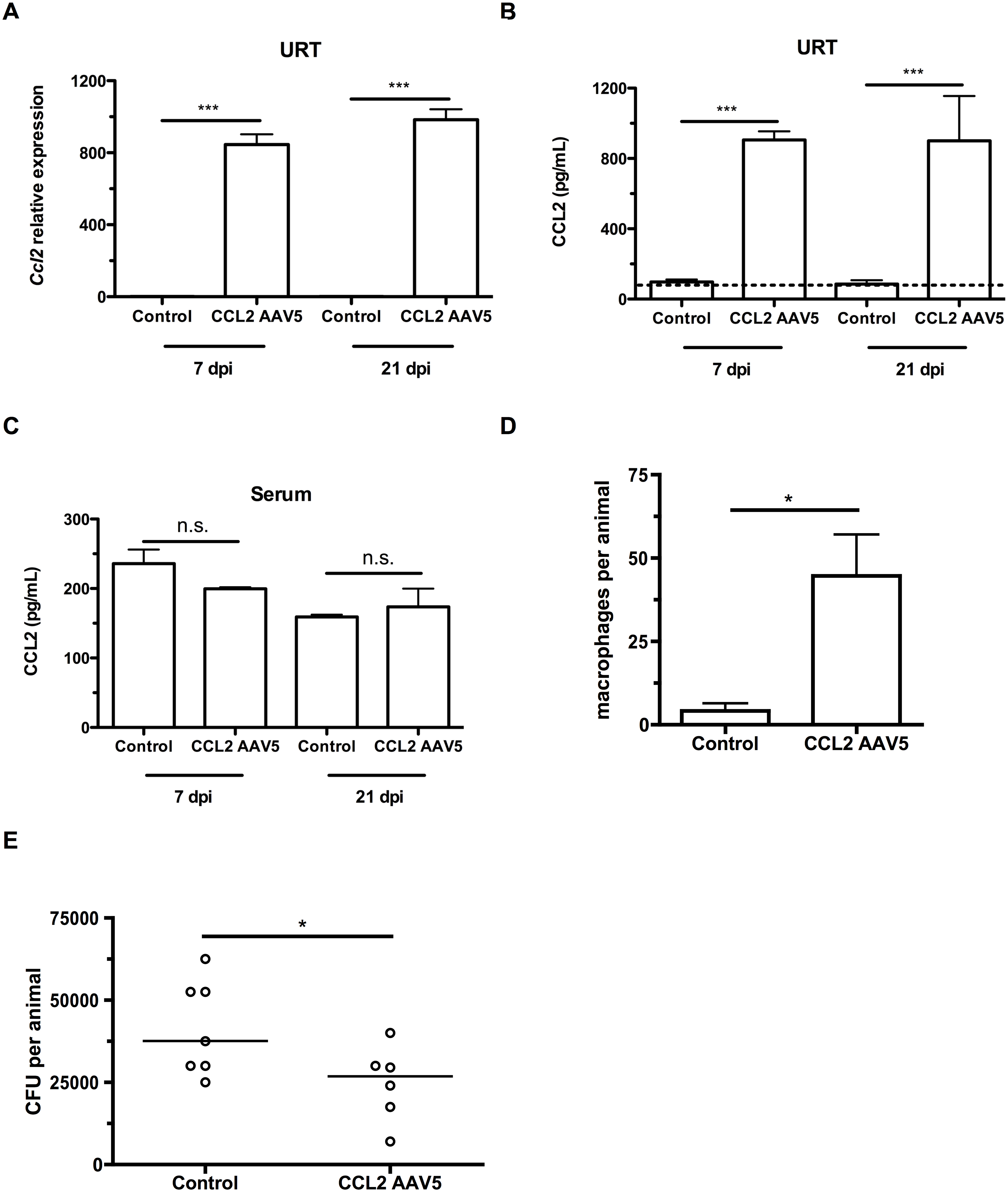 CCL2 overexpression increases macrophage recruitment and pneumococcal clearance.