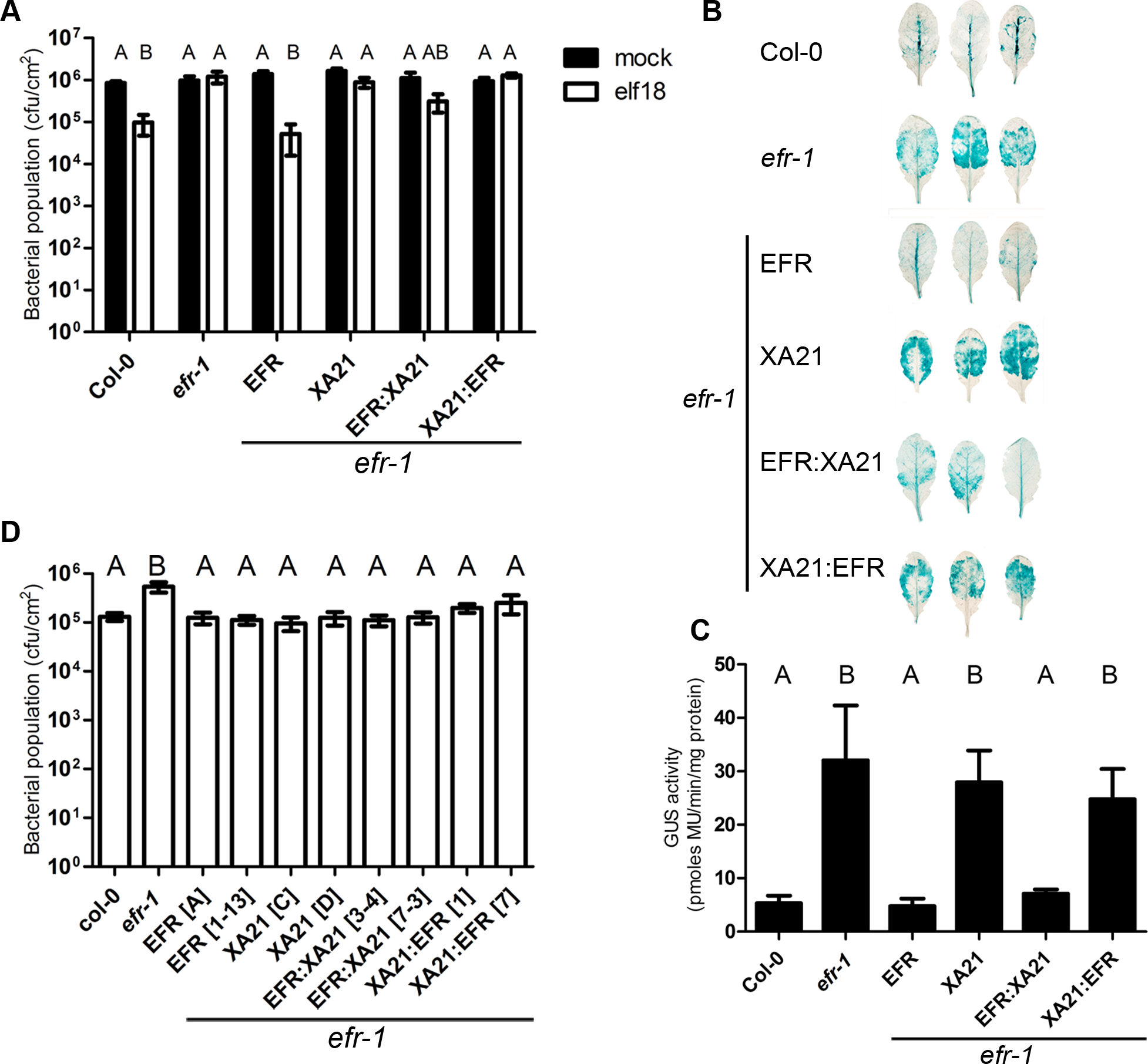 Bacterial resistance conferred by EFR, XA21 and chimeric receptors in <i>A. thaliana</i>.