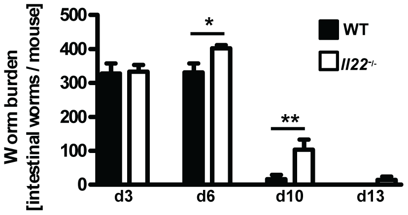 <i>Il22</i><sup>−/−</sup> mice have reduced worm expulsion.
