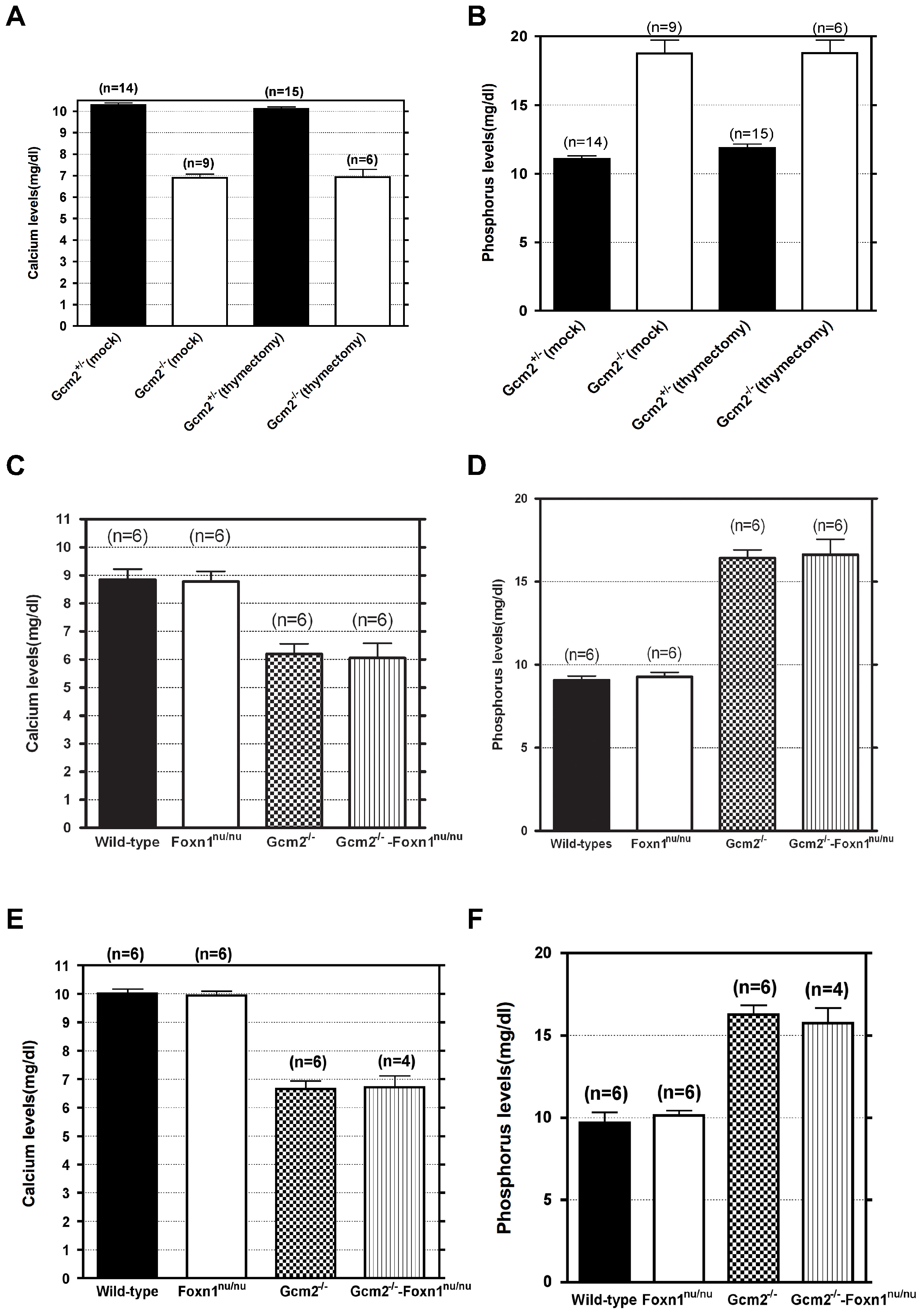 Neither thymectomy nor the <i>Foxn1<sup>nu</sup></i> mutation exacerbated the hypoparathyroidism phenotype in <i>Gcm2</i><sup>−/−</sup> mutants.