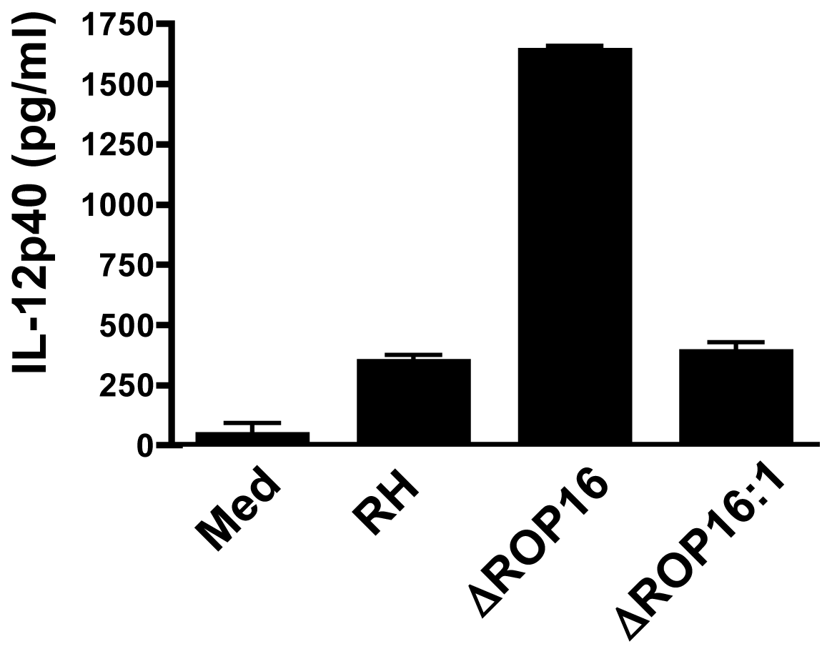 ROP16 negatively regulates IL-12p40 production.