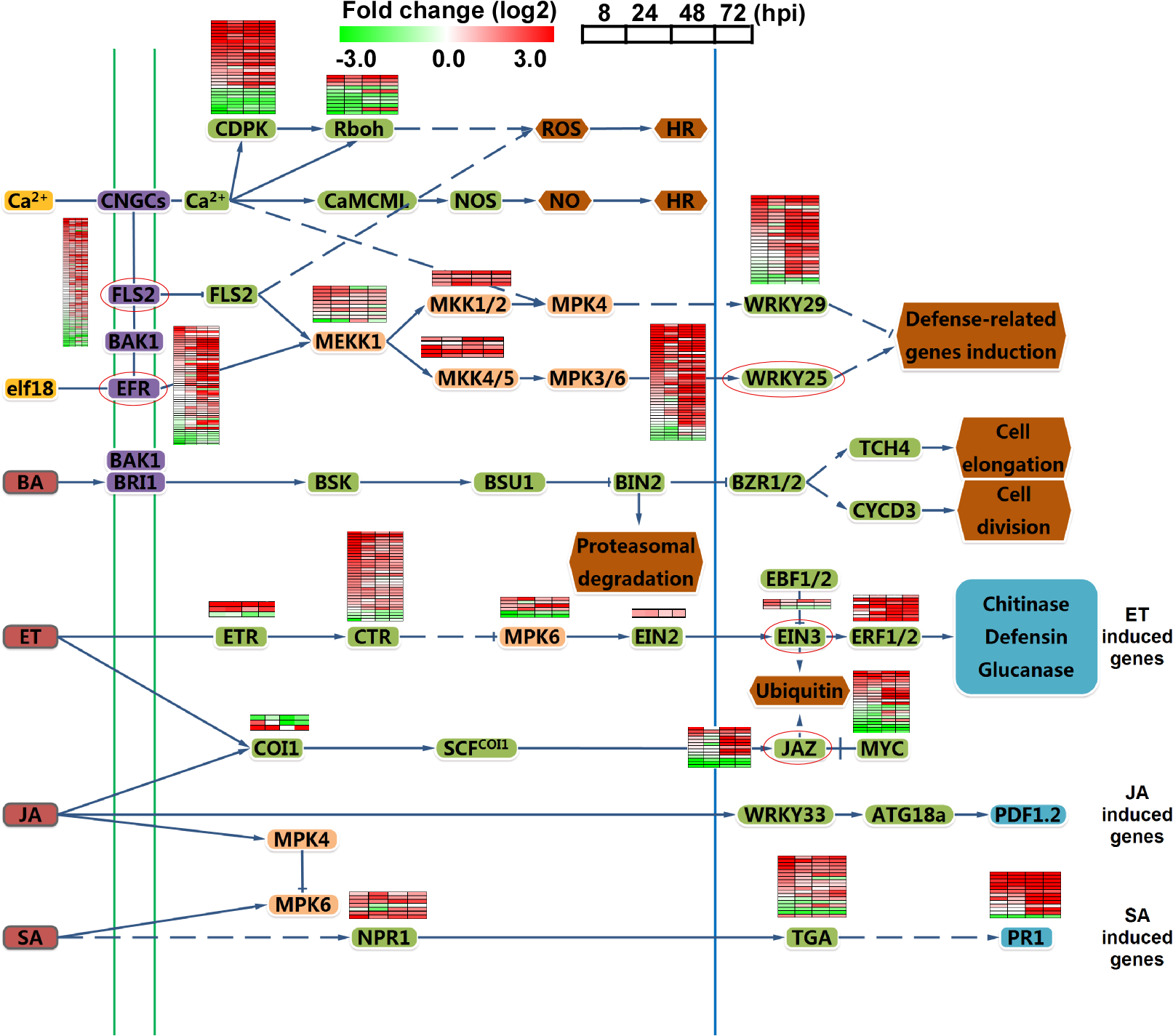Analysis of different signal pathways gene expression in rice.